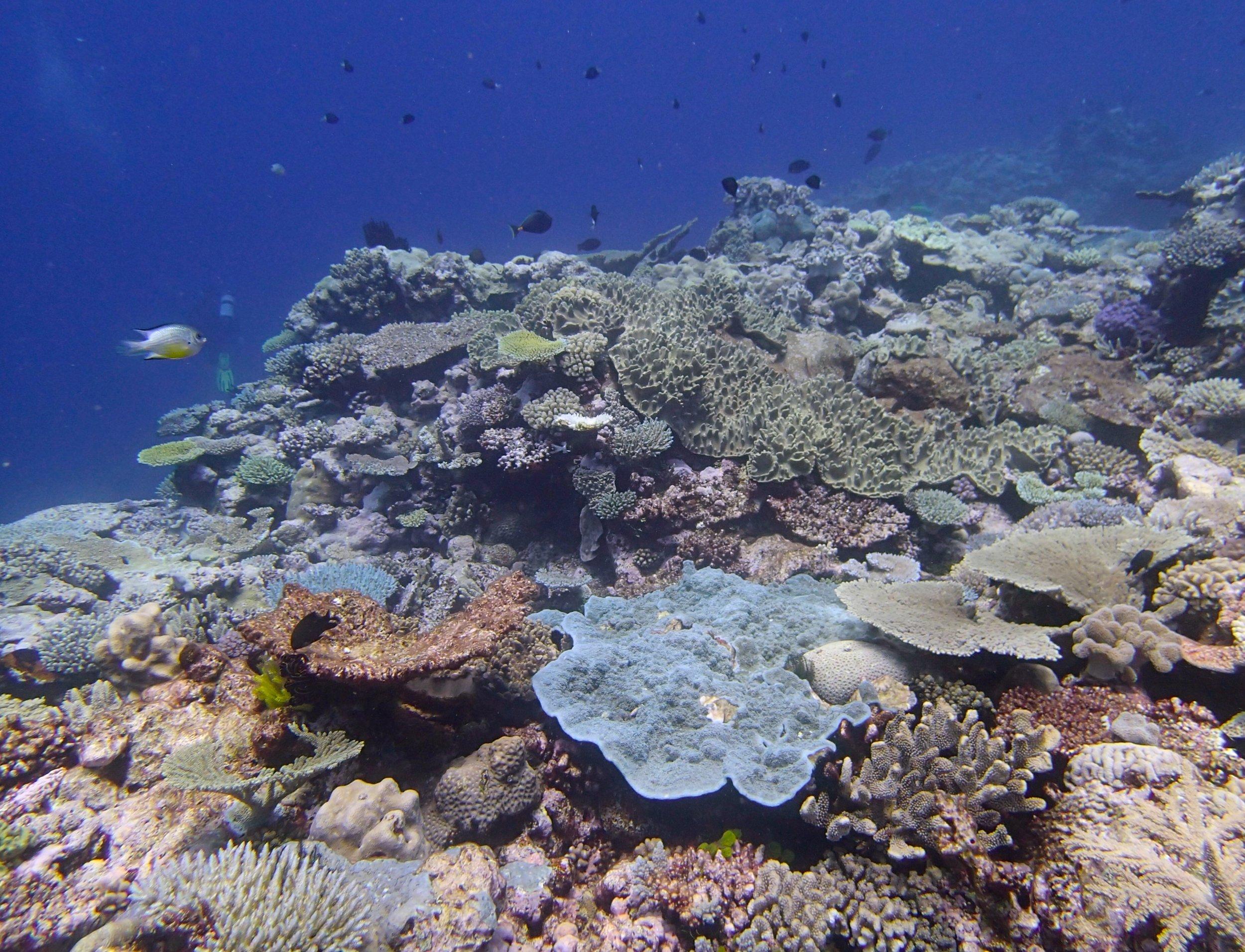 2nd dive at Portail atoll.jpg