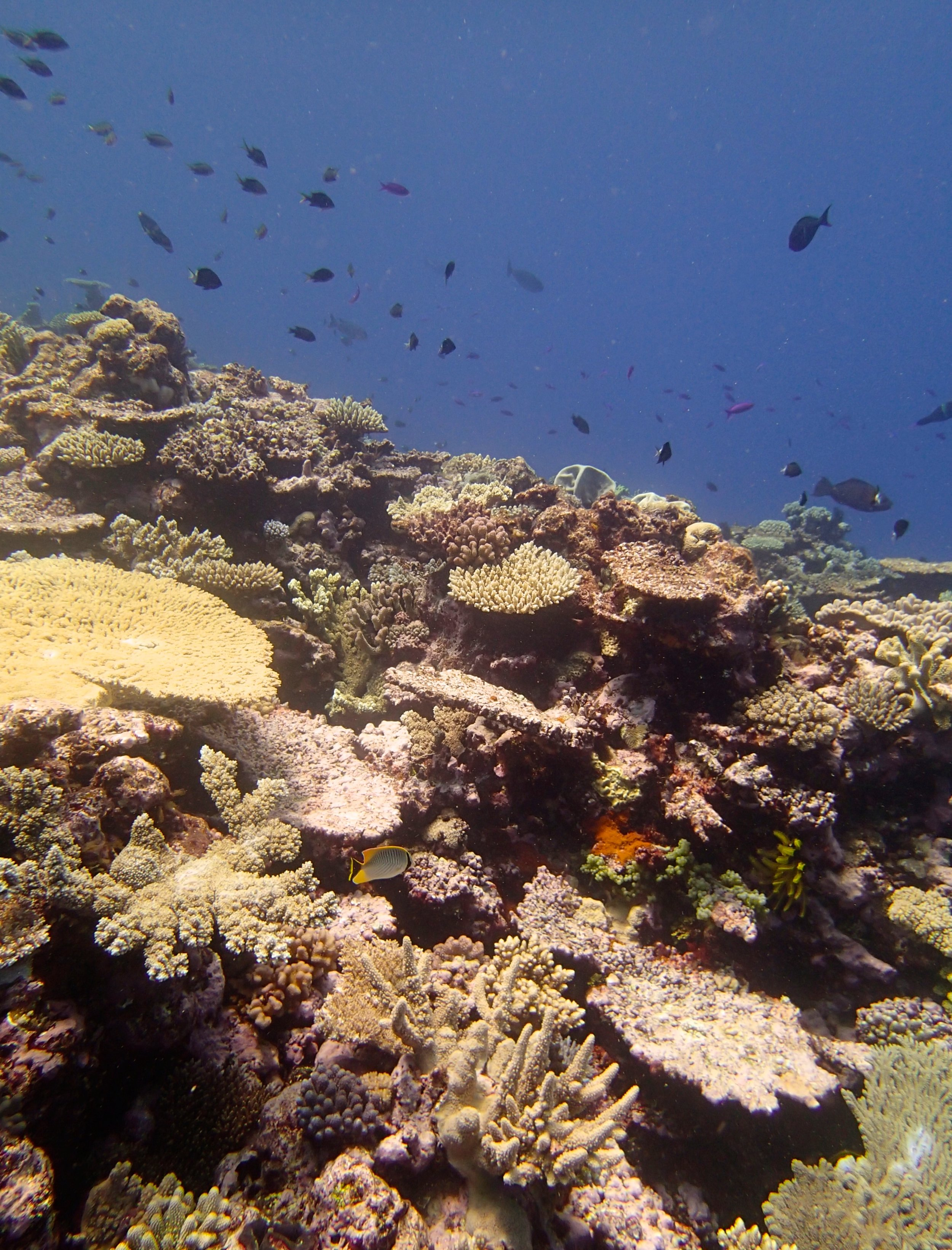 beautiful Portail Atoll.jpg