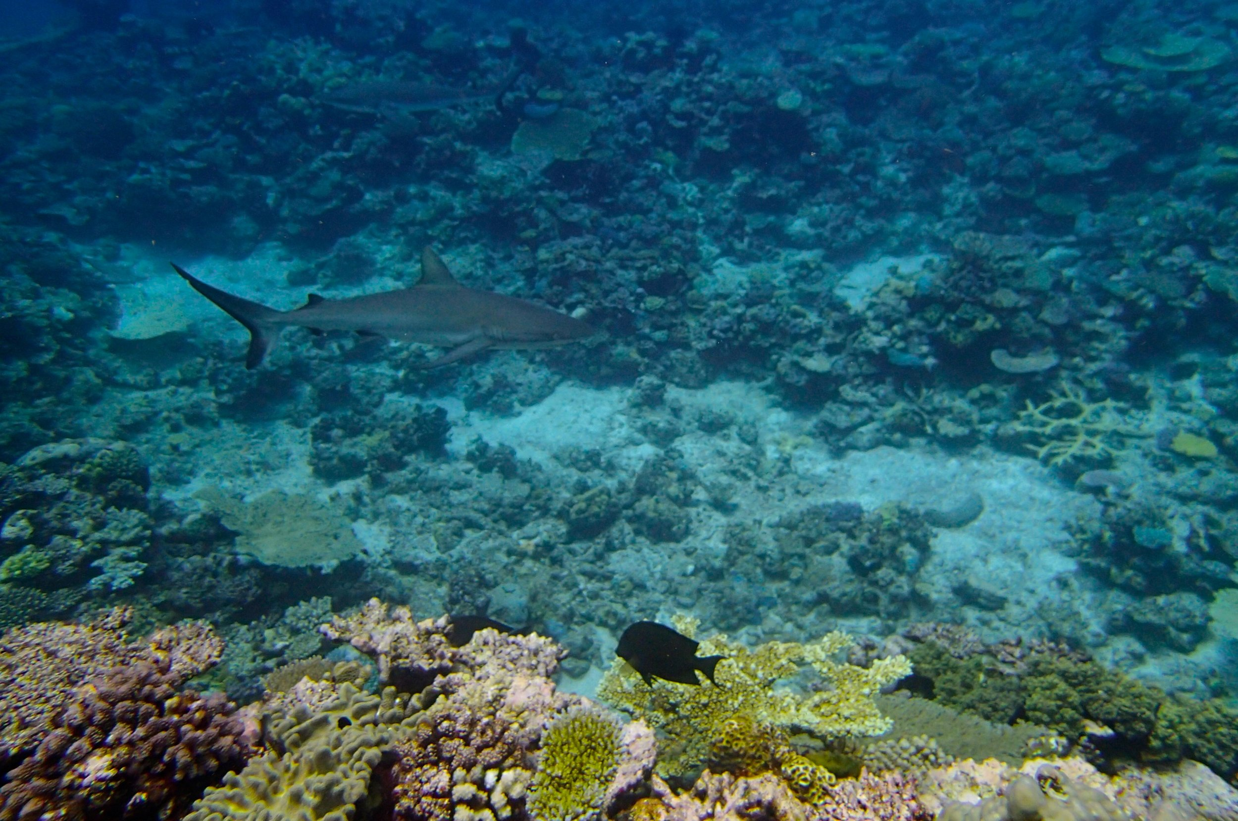 good shark shot (1).jpg