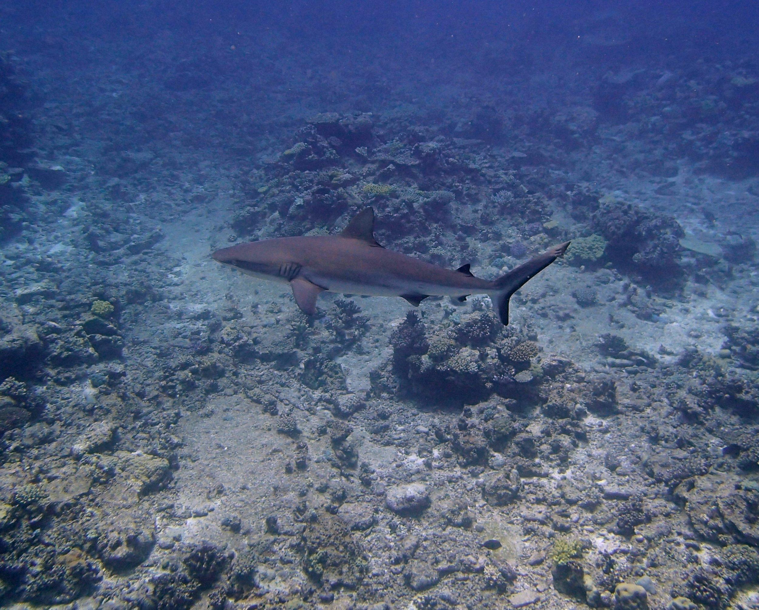 good shark shot (2).jpg