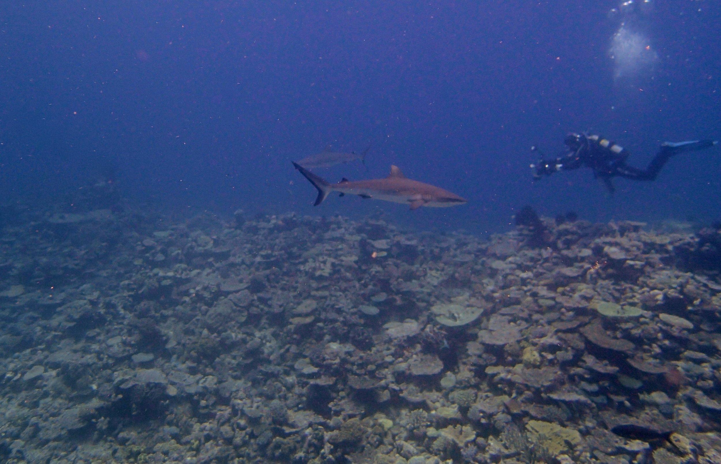 Joao and sharks.jpg