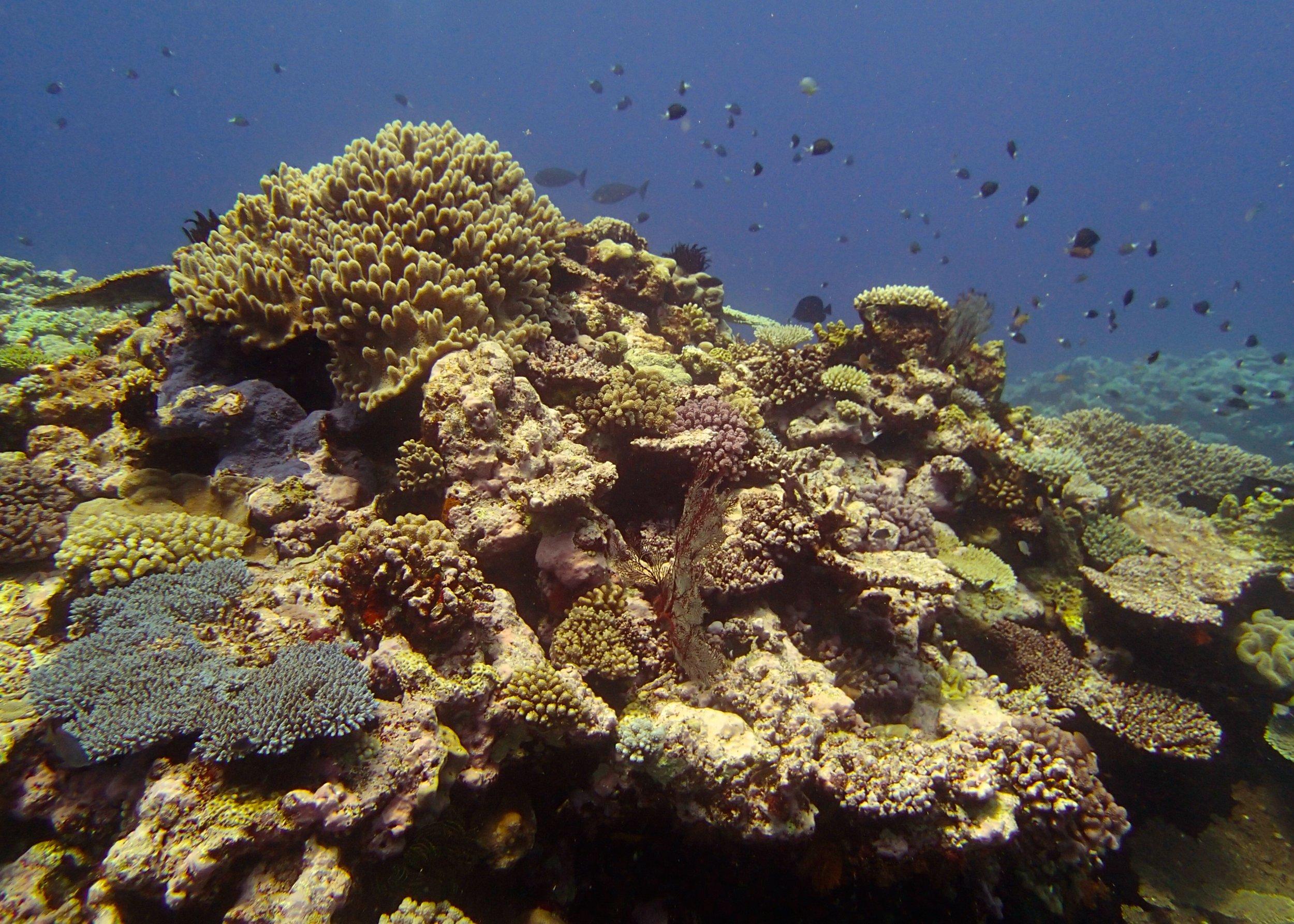 Portail Atoll (1).jpg