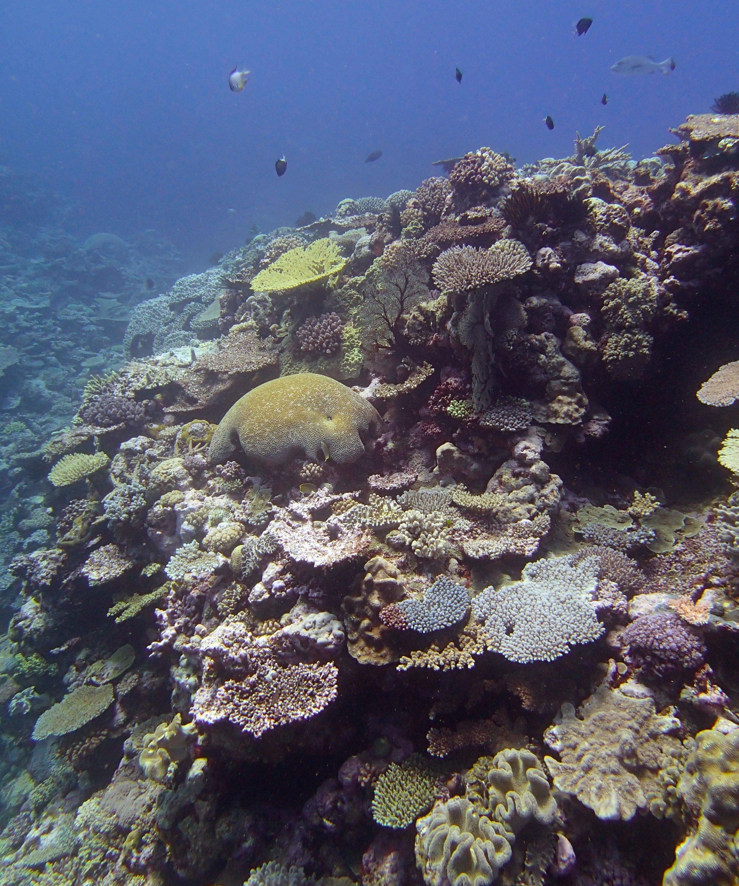 Portail Atoll.jpg
