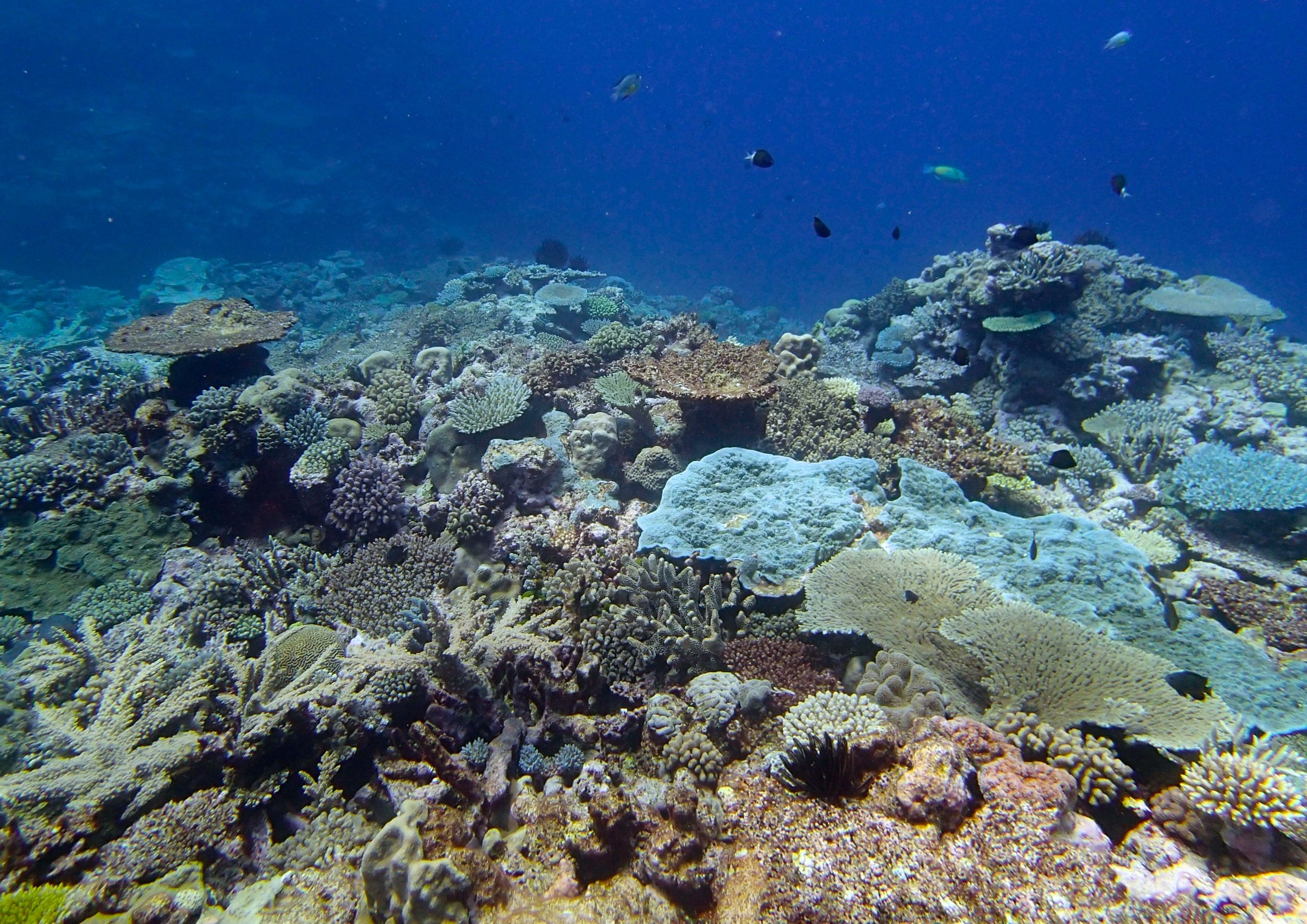 Portail Atoll (2).jpg