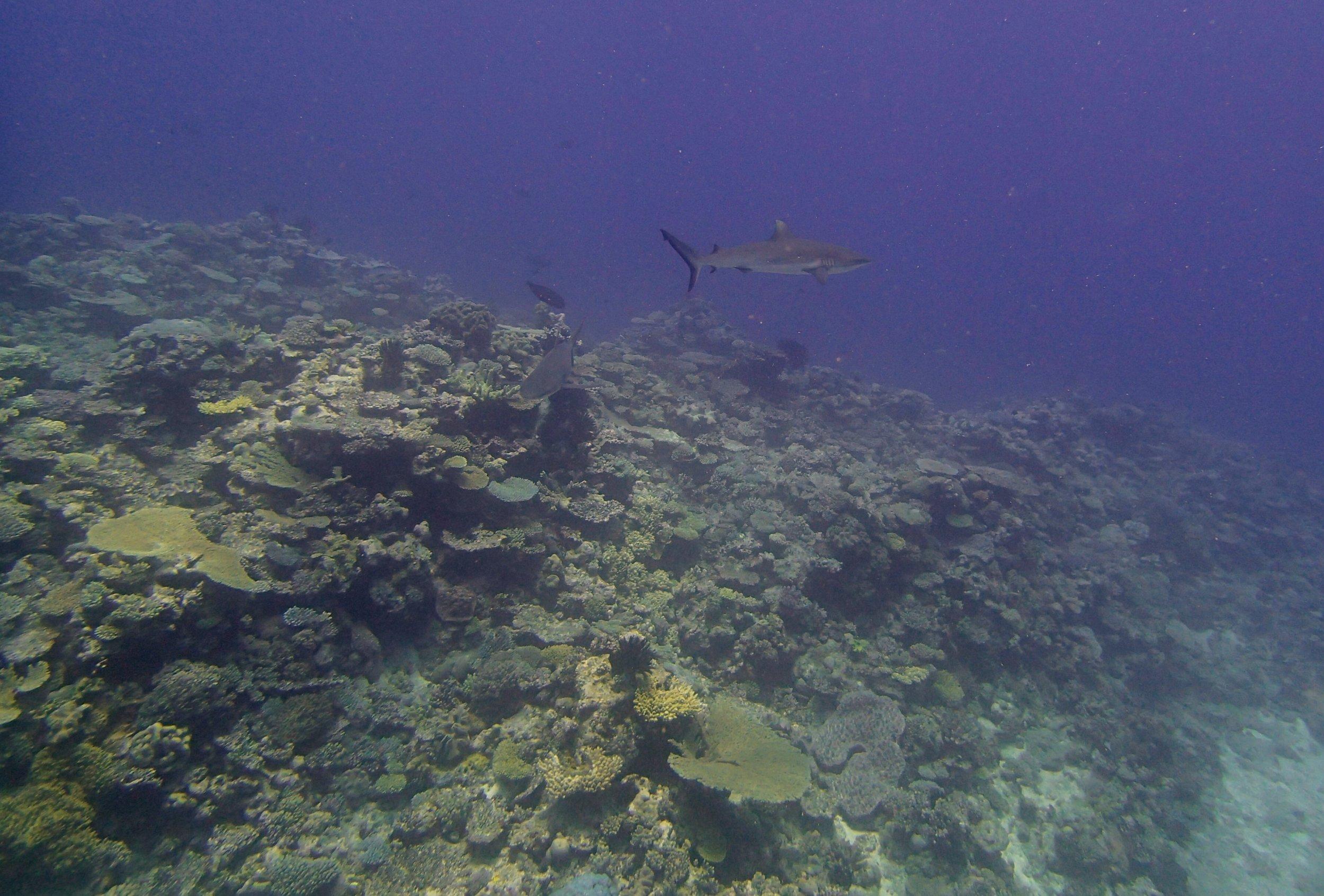 sharks (1).jpg