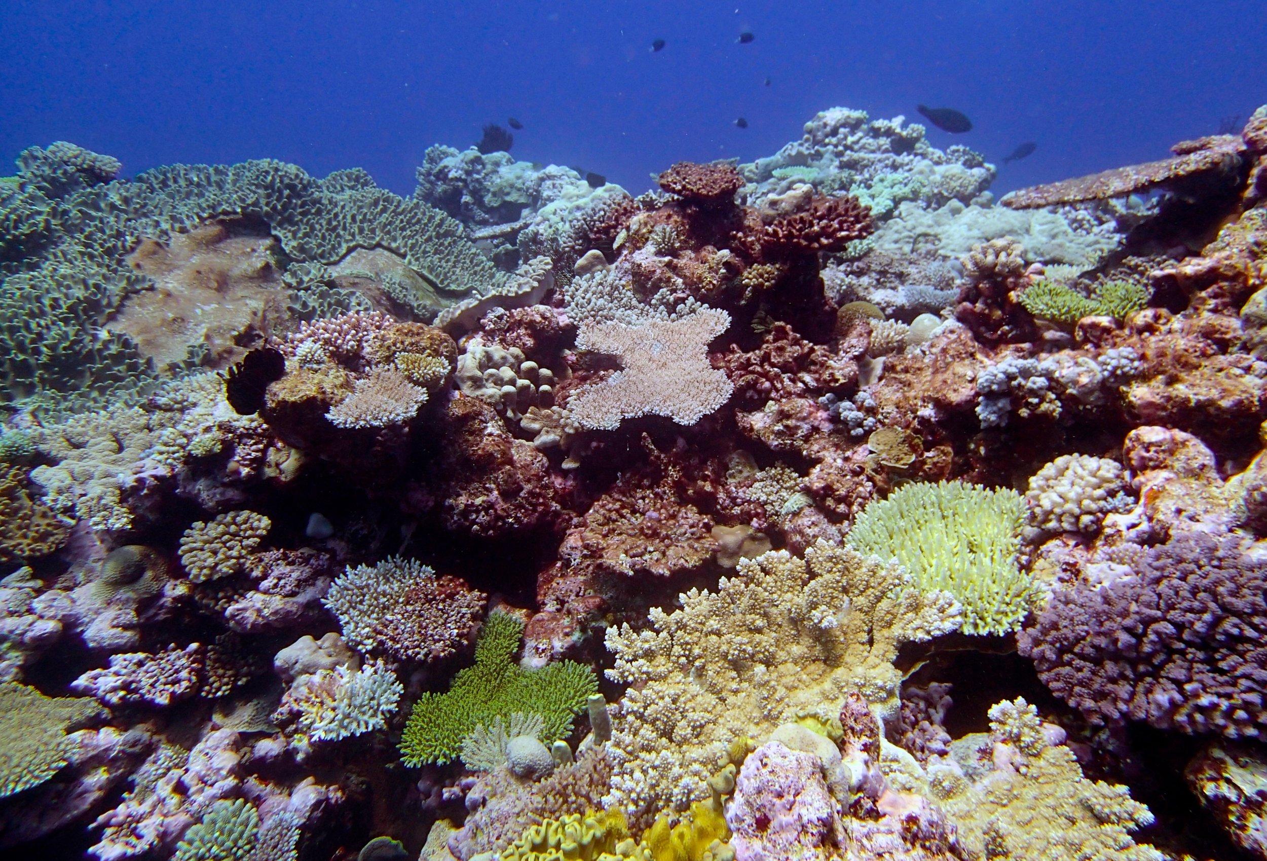 super colorful reef.jpg