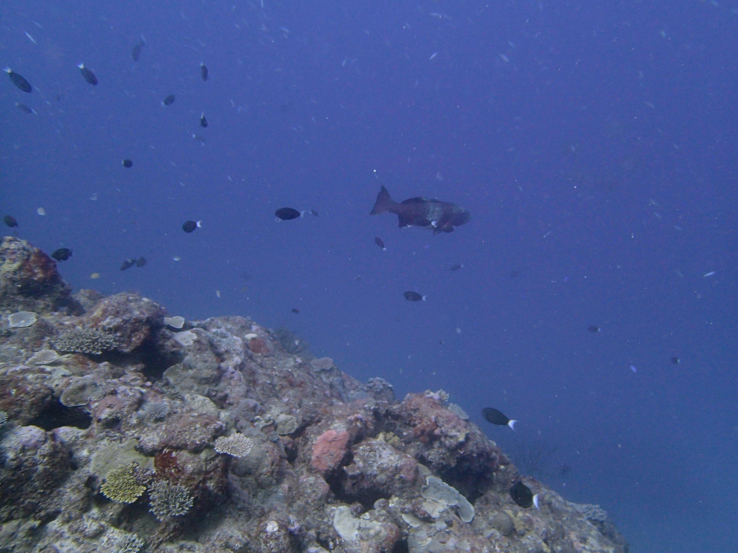 big grouper.jpg