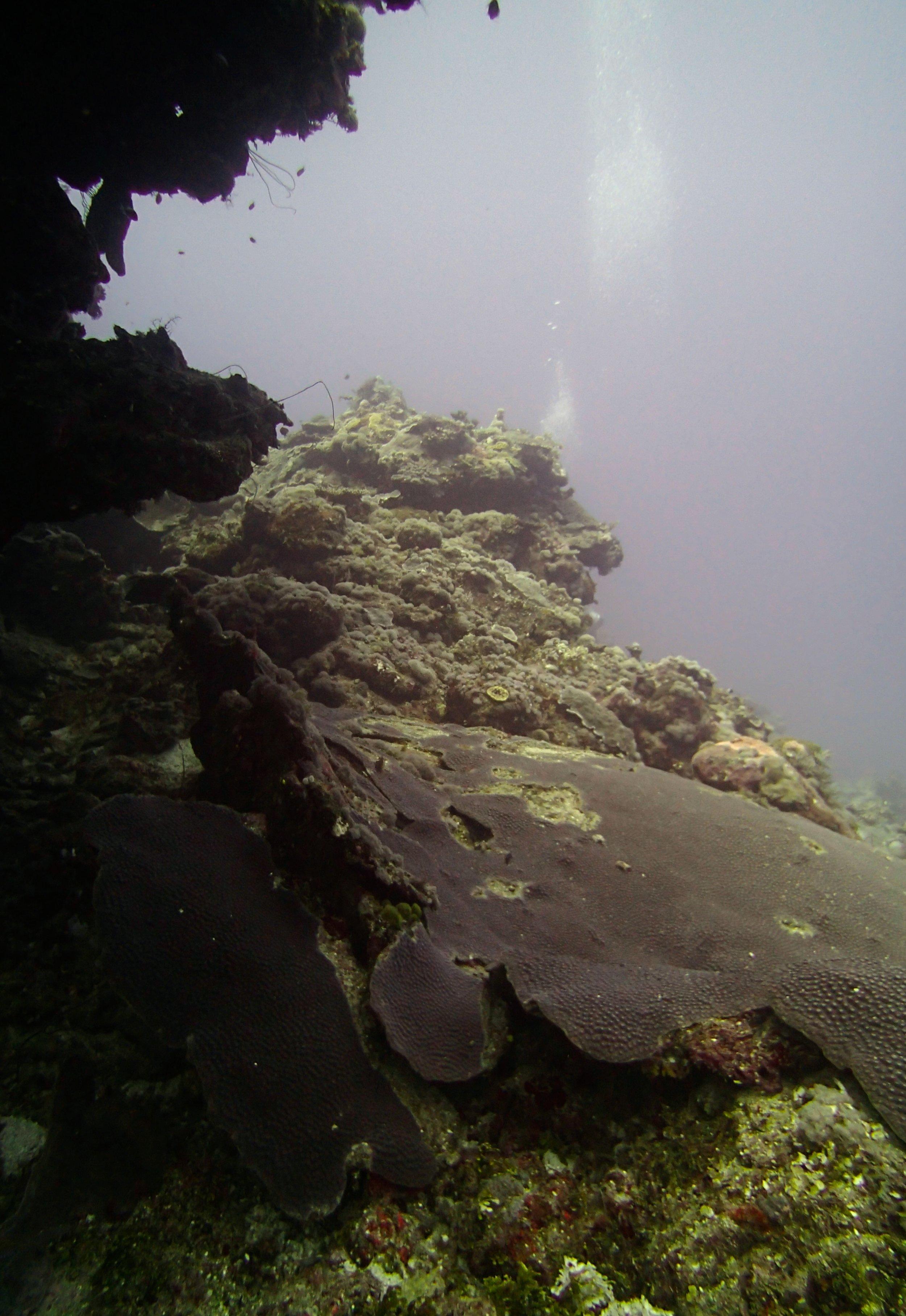 cave at 30 meters.jpg