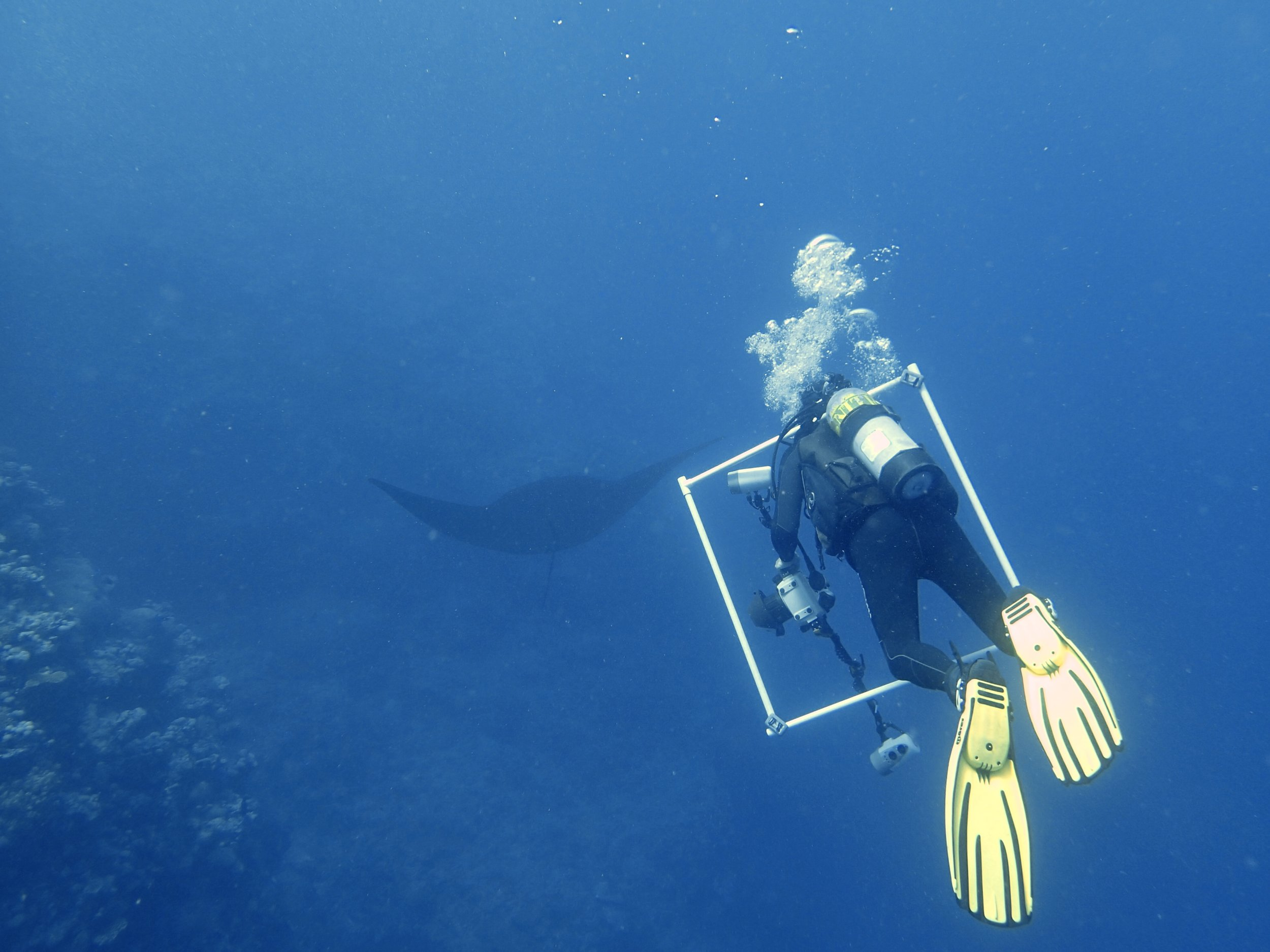 Ken and manta ray.jpg