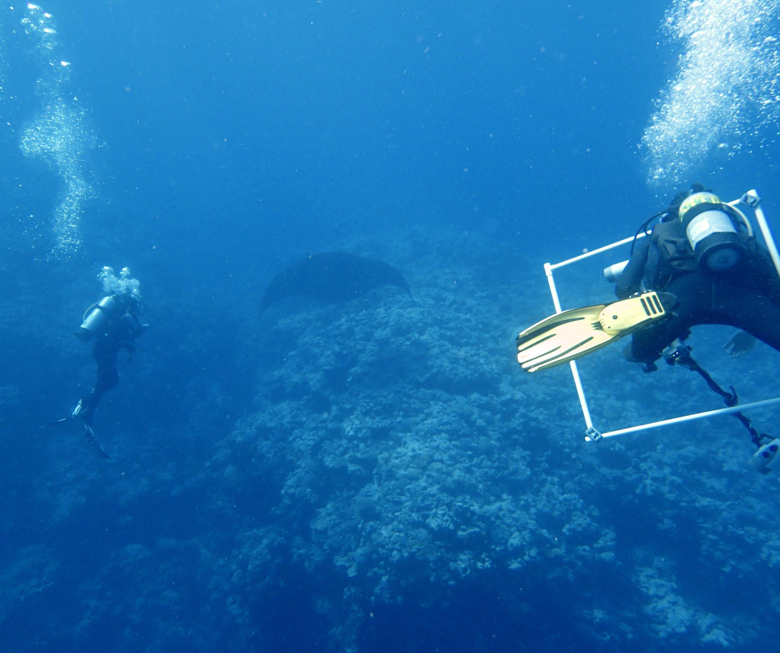 manta ray (8).jpg