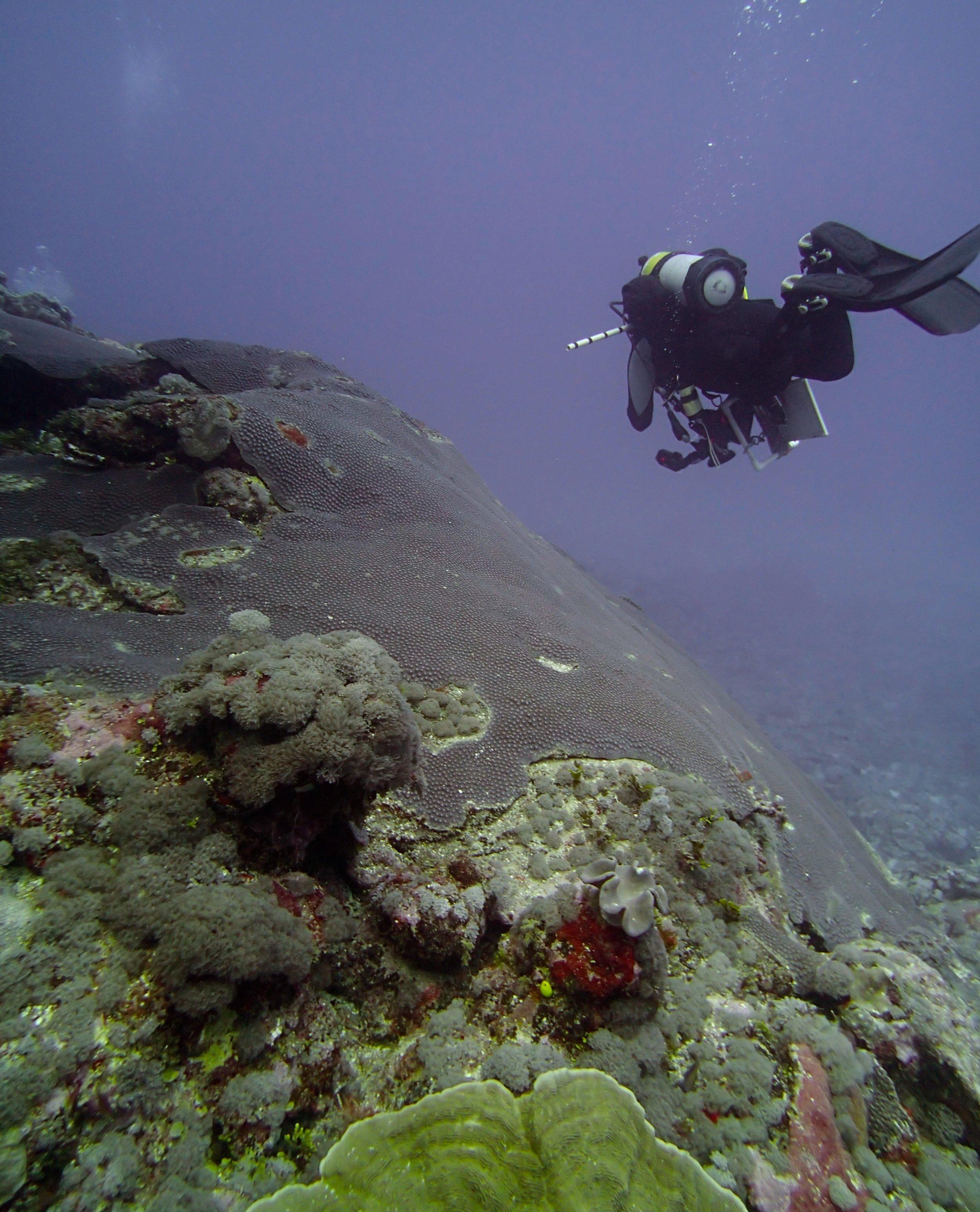 NCHU43 Alex at 30 meters.jpg