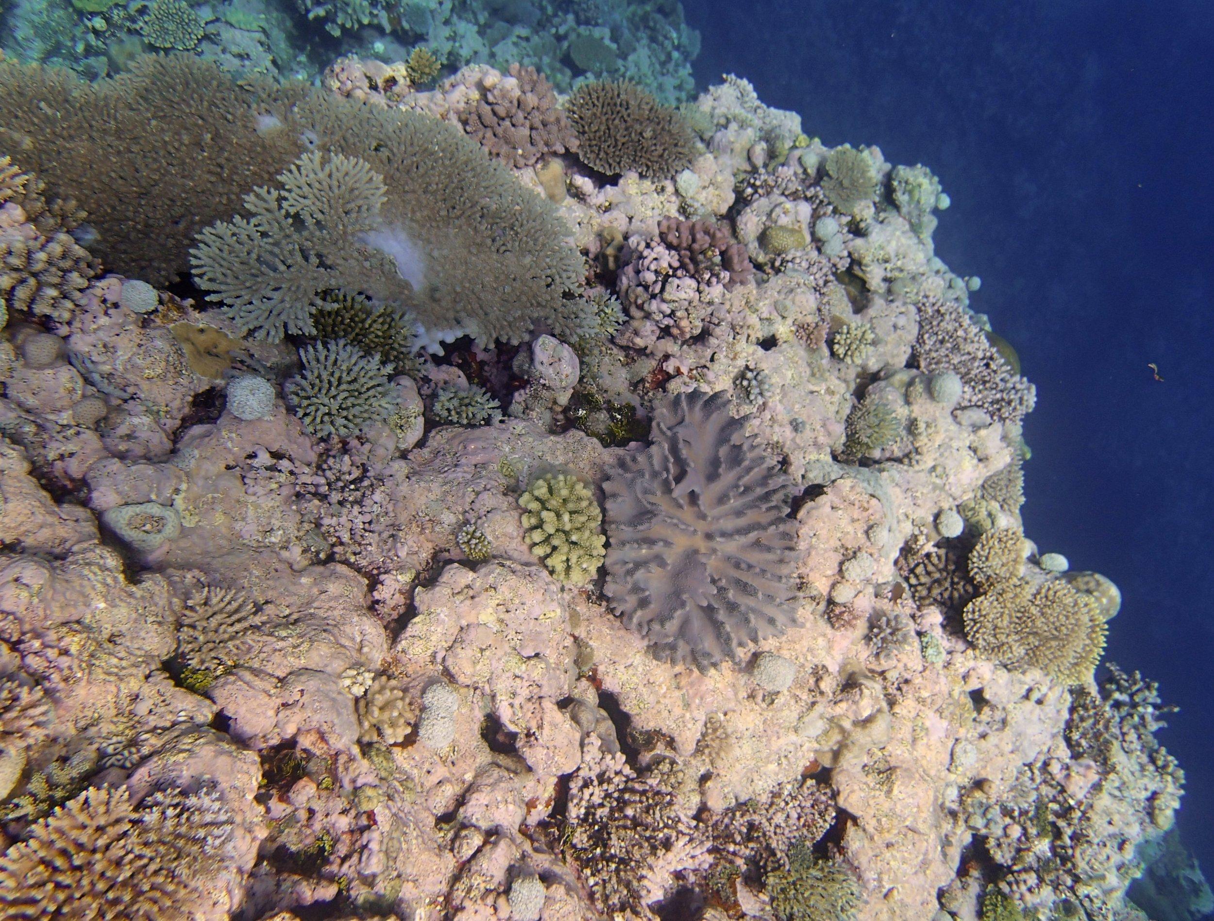 CCA reef (1).jpg
