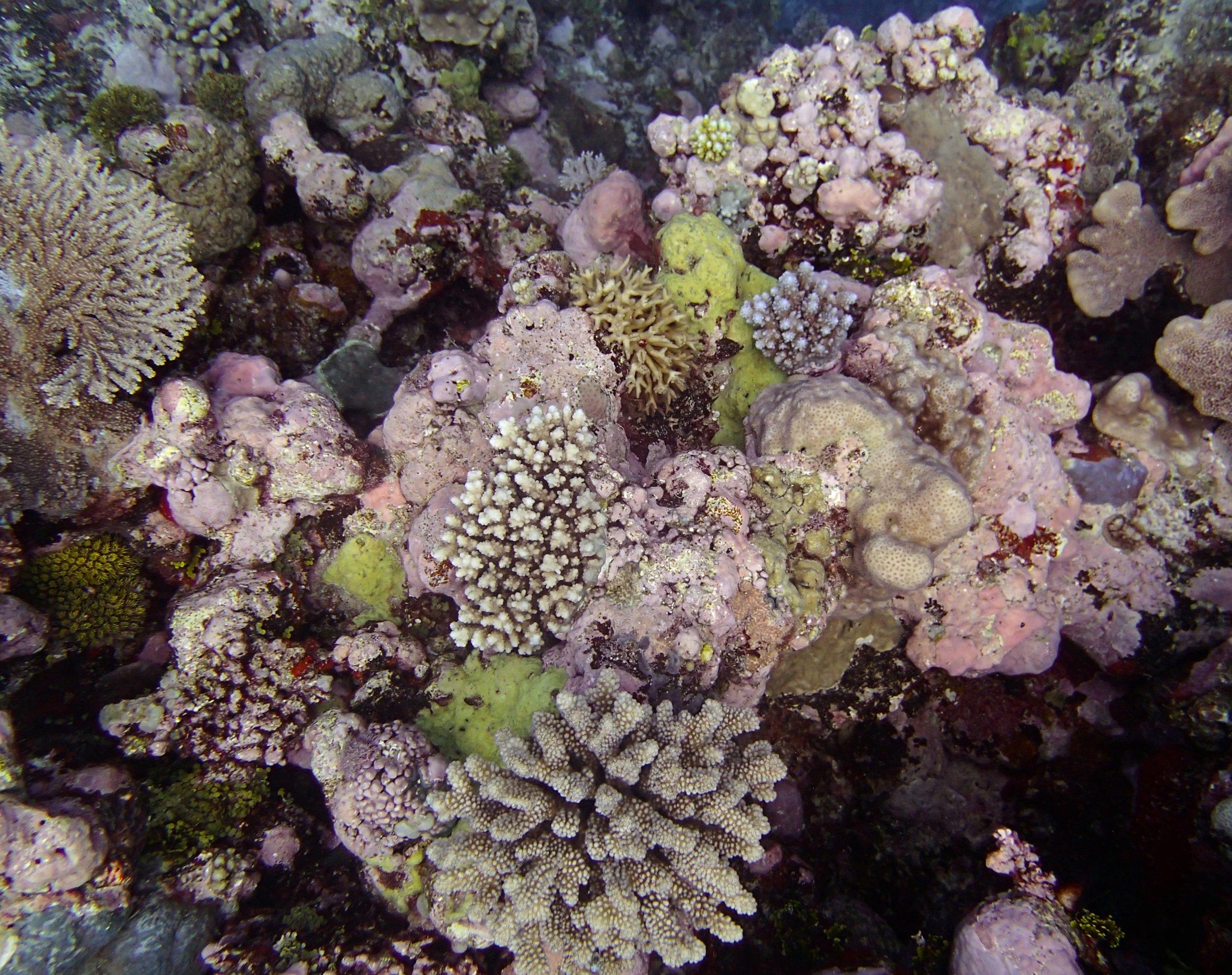 CCA reef.jpg