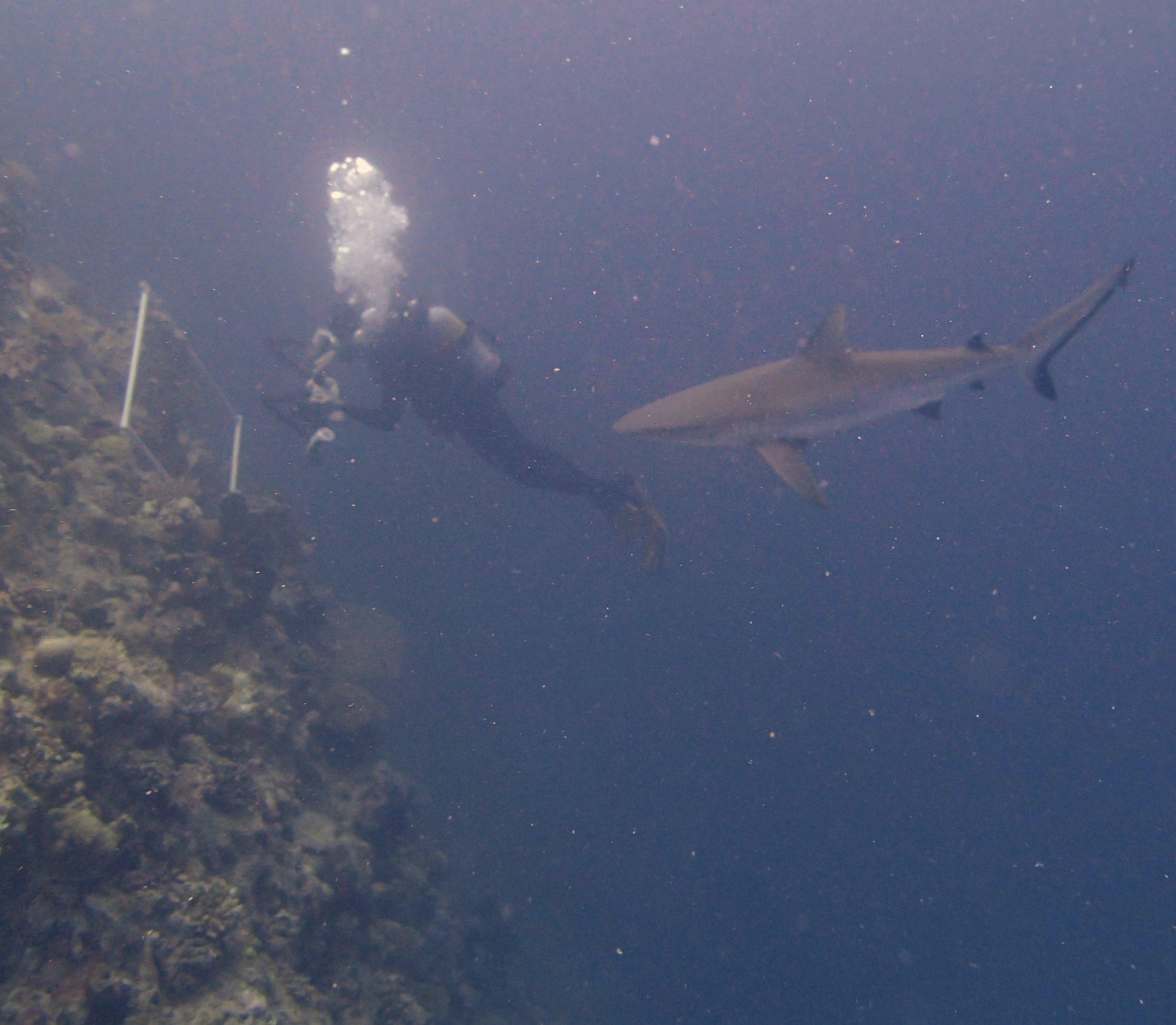 Ken and shark.jpg