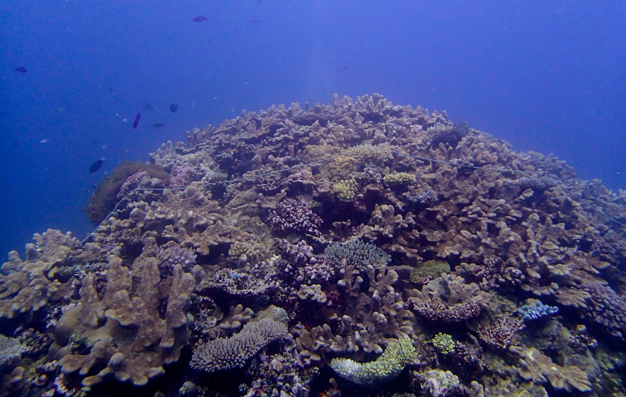 coral pinnacle.jpg