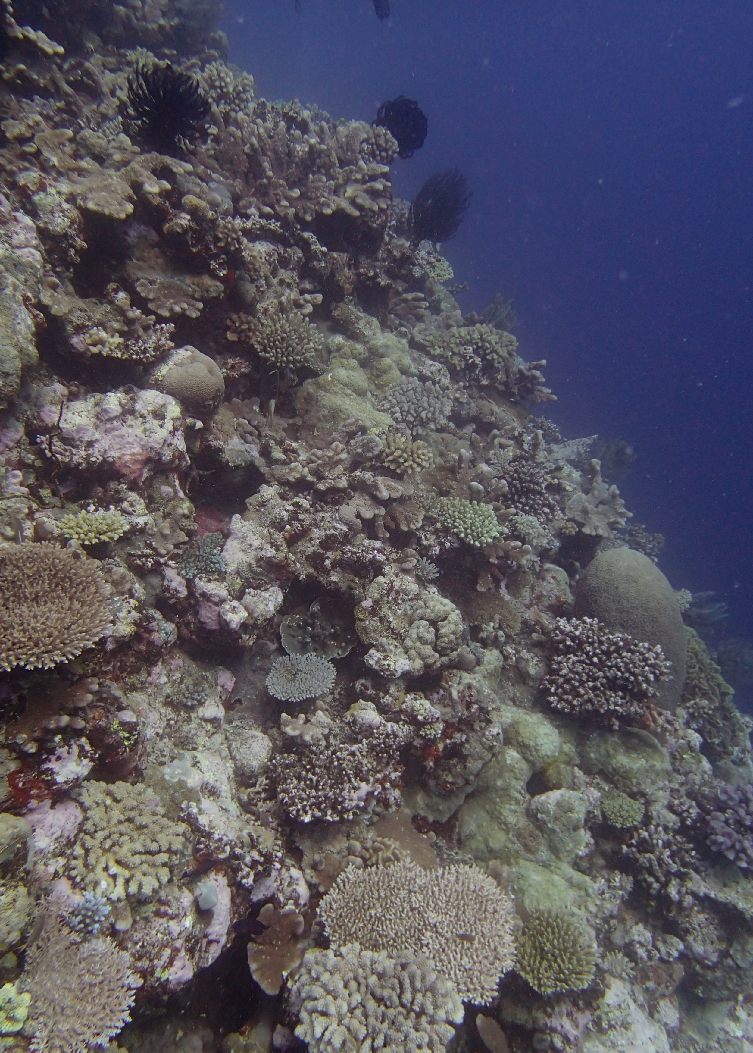 cool coral assemblage.jpg