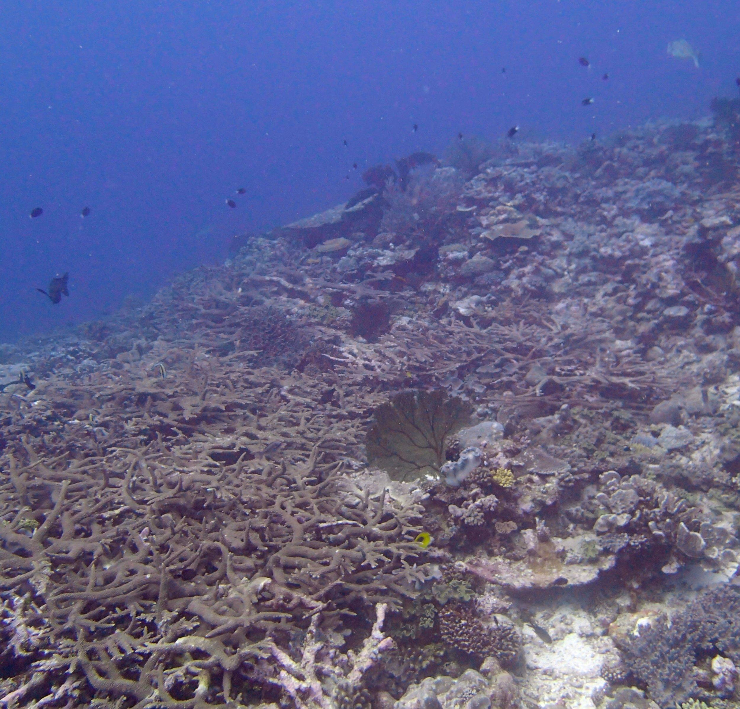 healthy reef.jpg