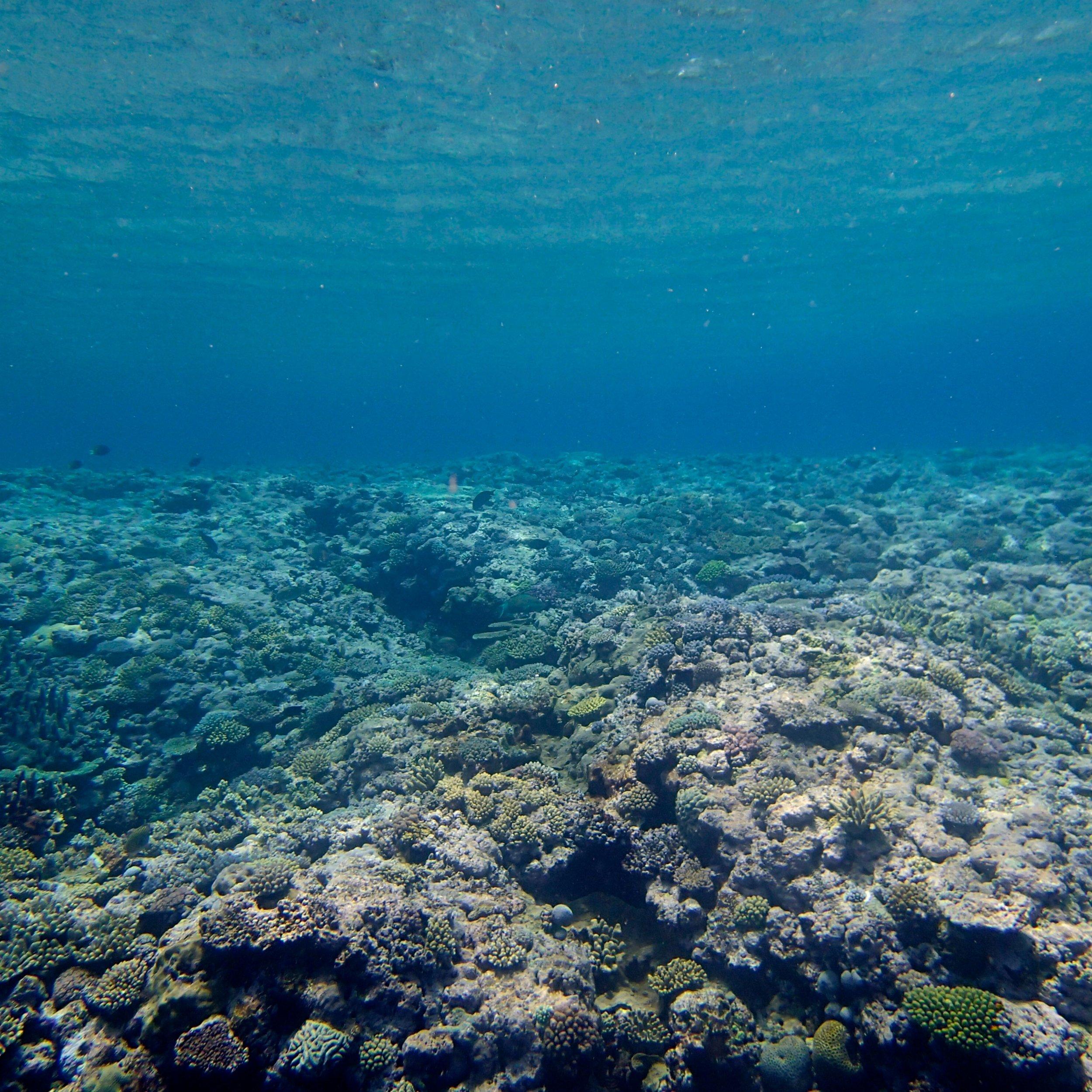 Huon Atoll (1).jpg