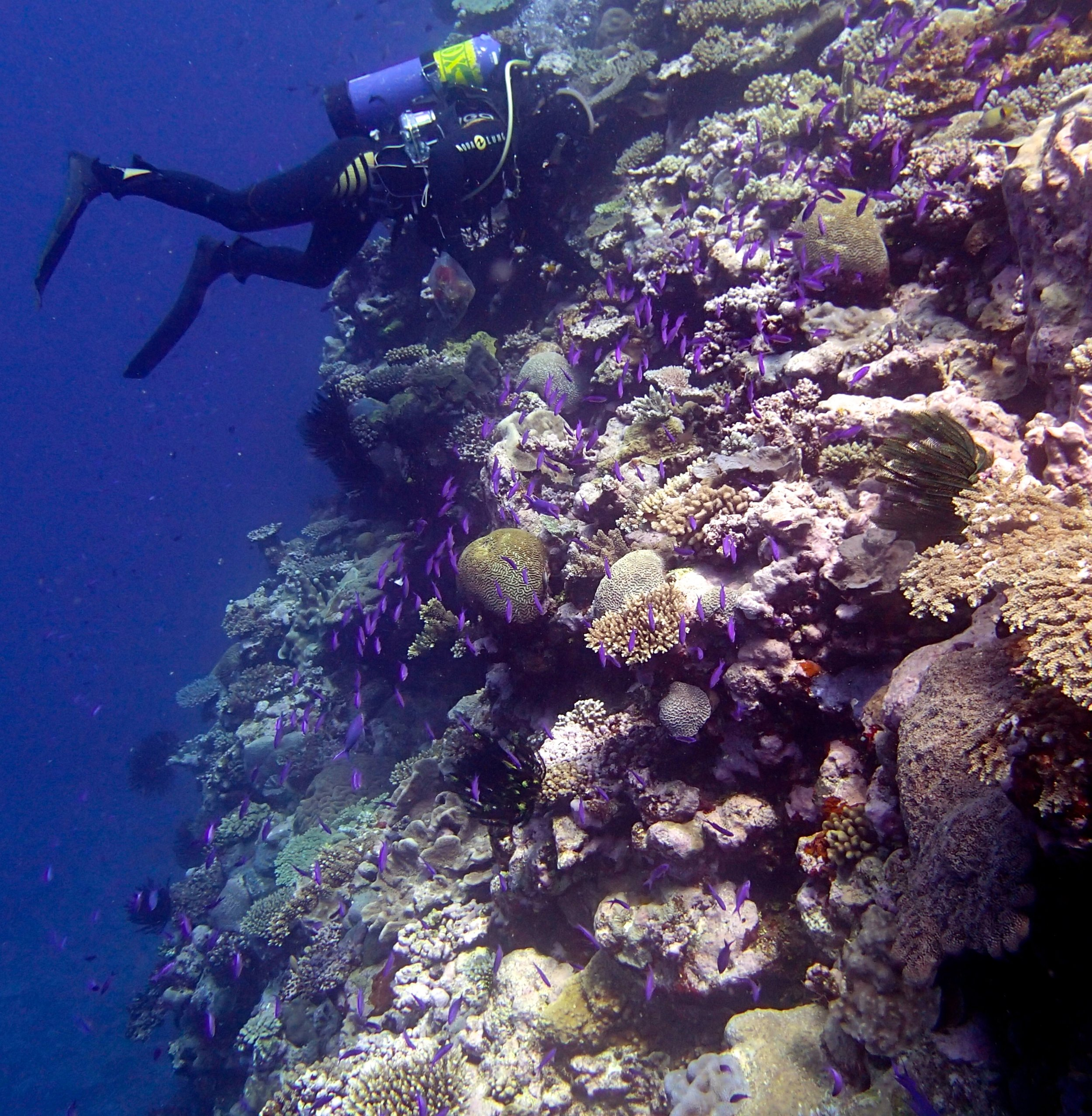 Antoinne and fish school (1).jpg