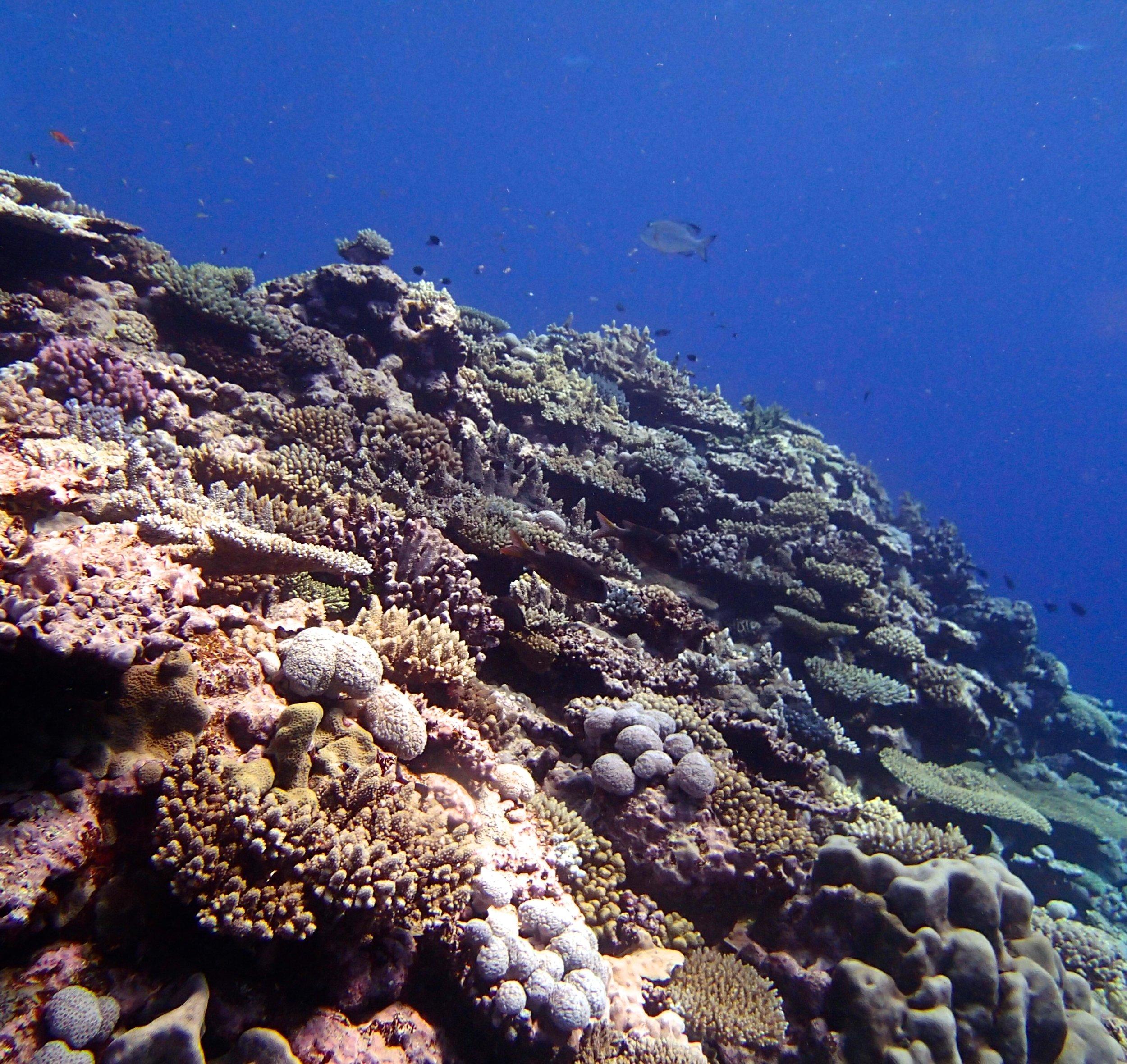 NCHU52 shallows.jpg