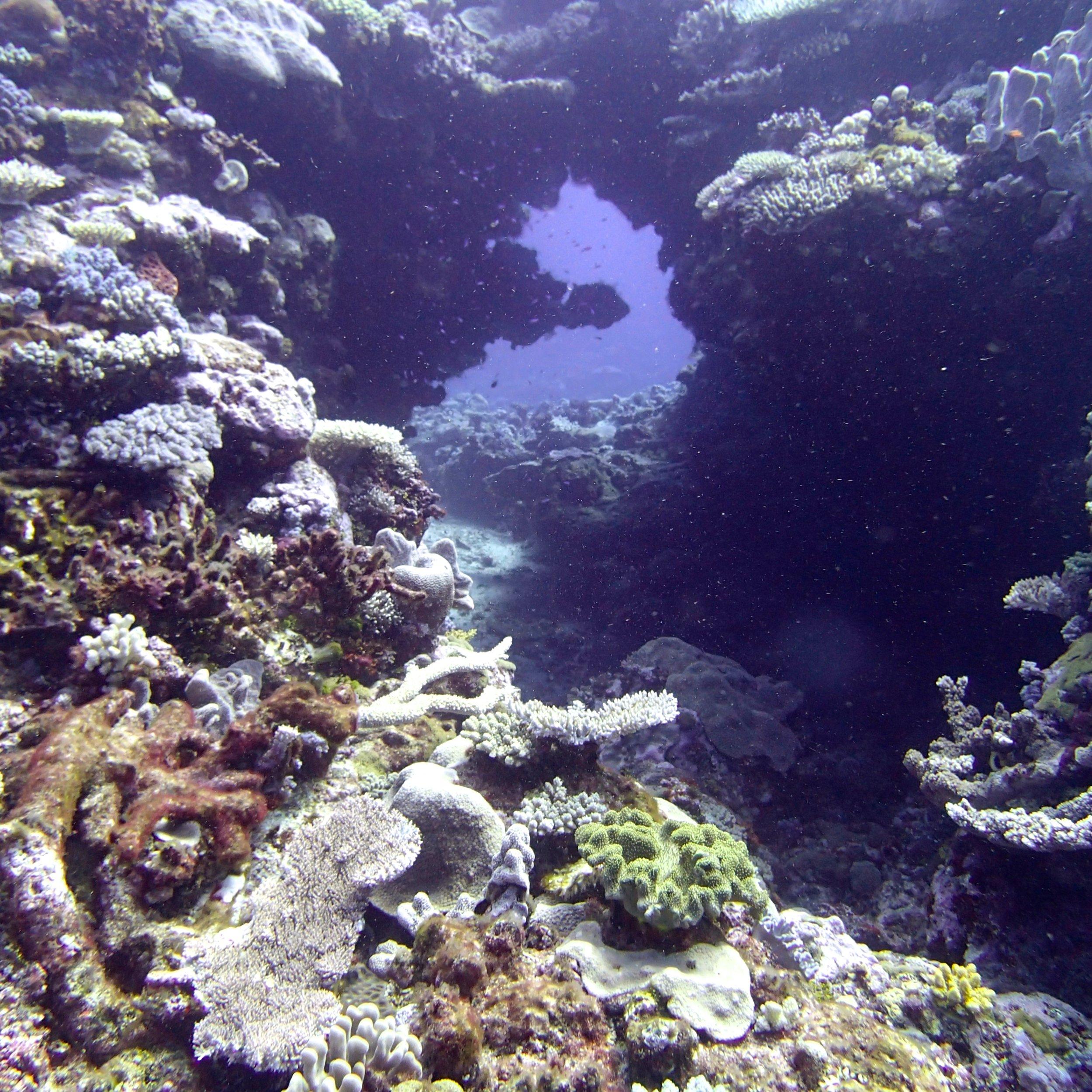 coral tunnel.jpg