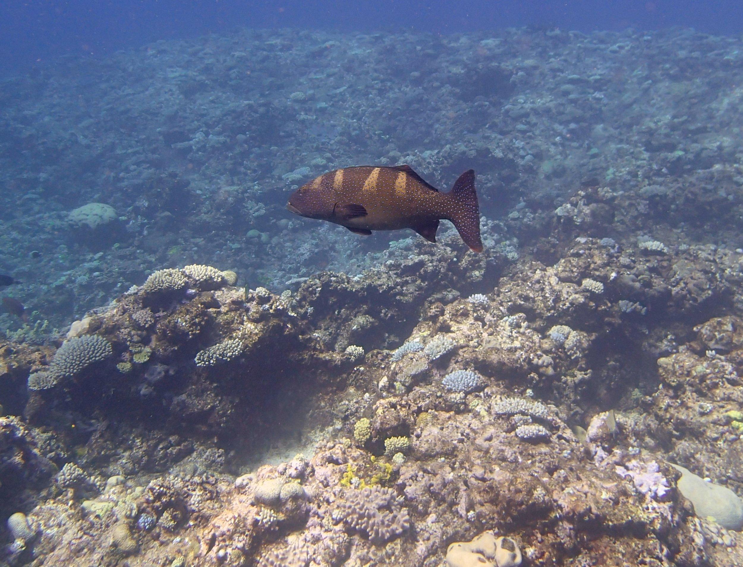 grouper (1).jpg