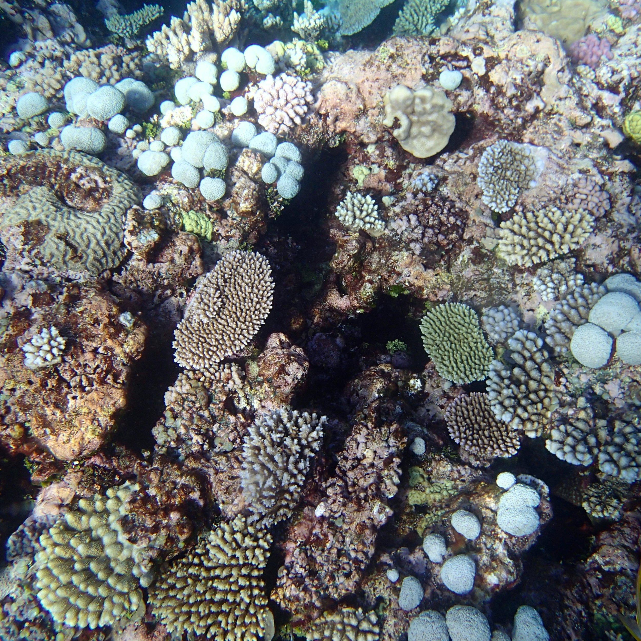 golf ball coral.jpg