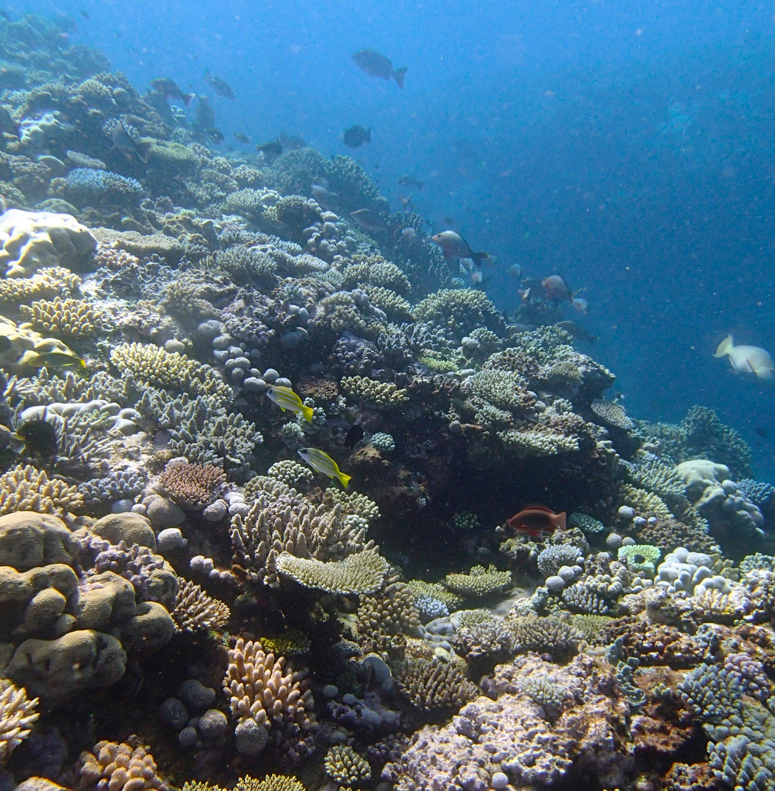 Coral Sea.jpg