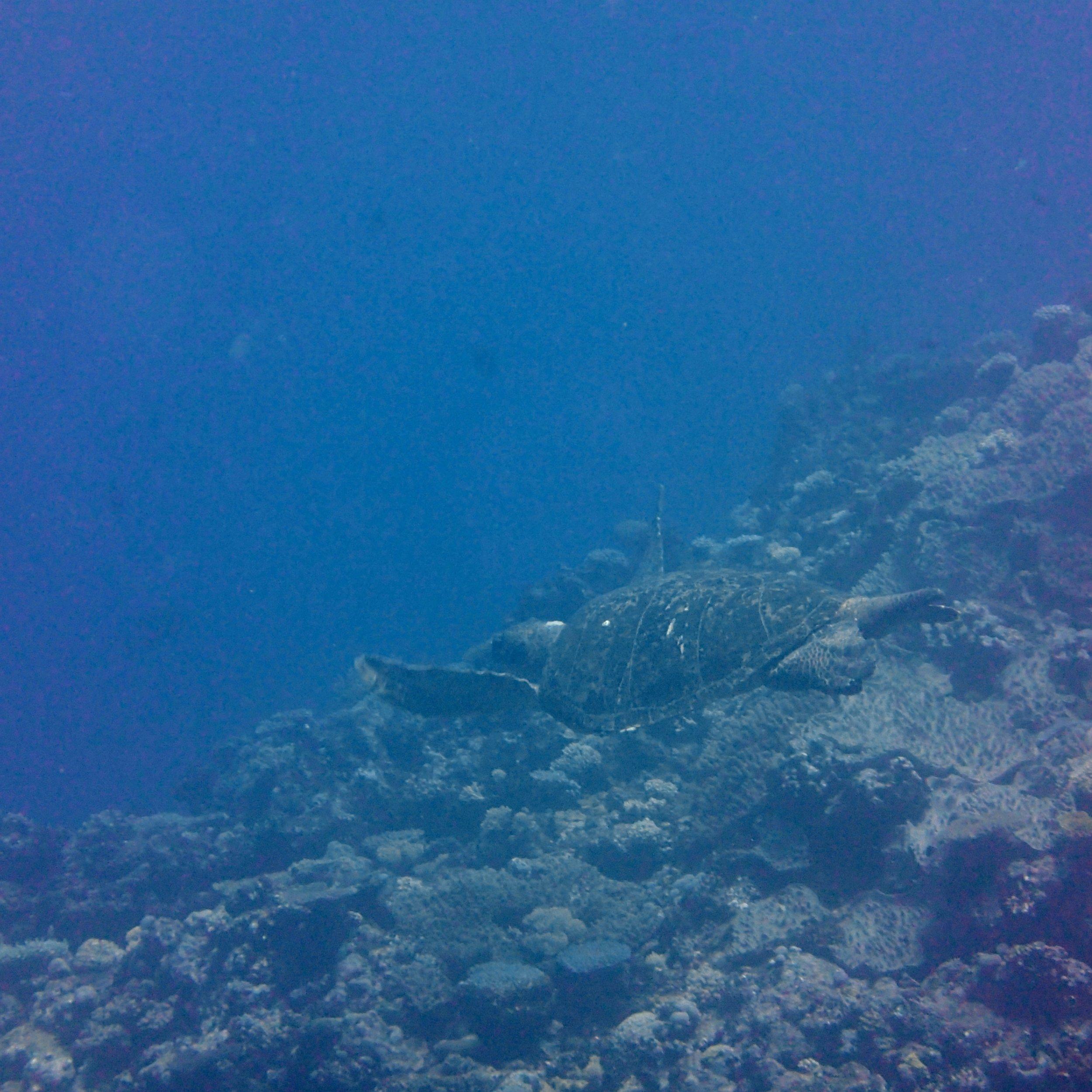turtle zoom.jpg