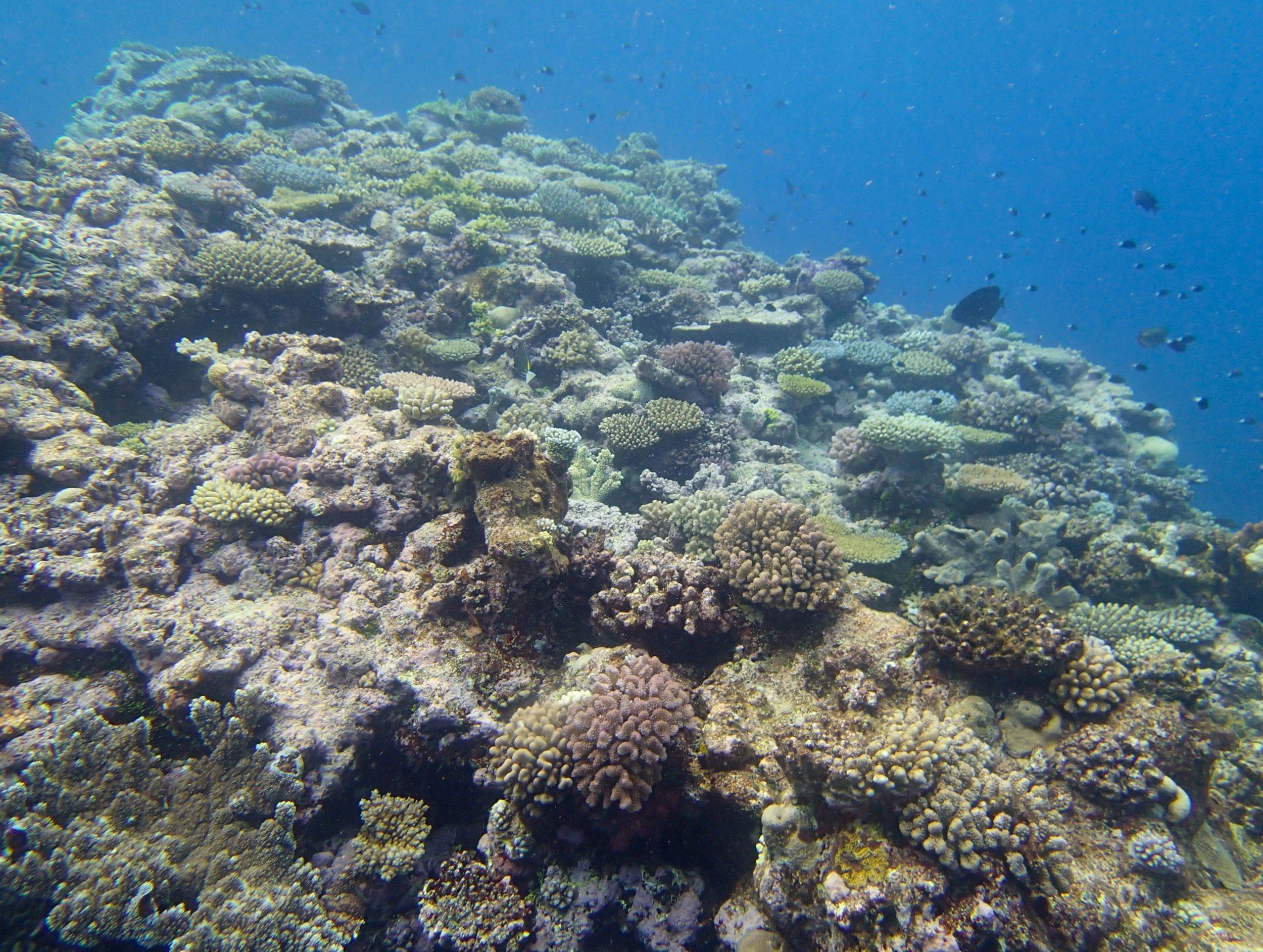 healthy part of reef.jpg