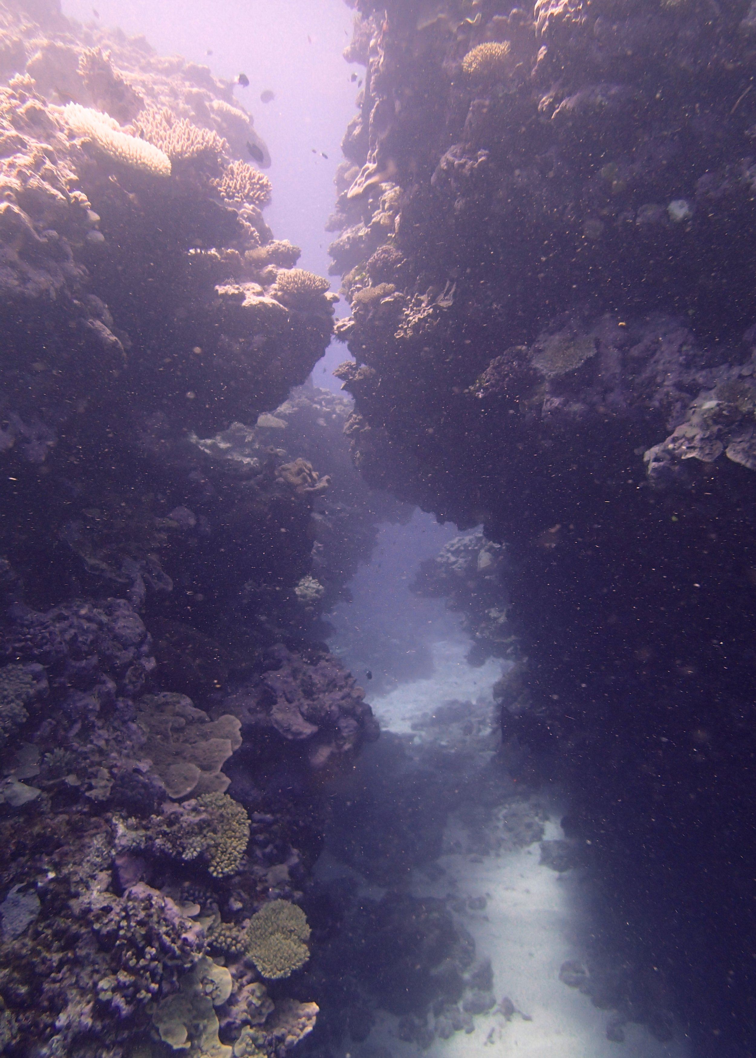 swim-through (1).jpg