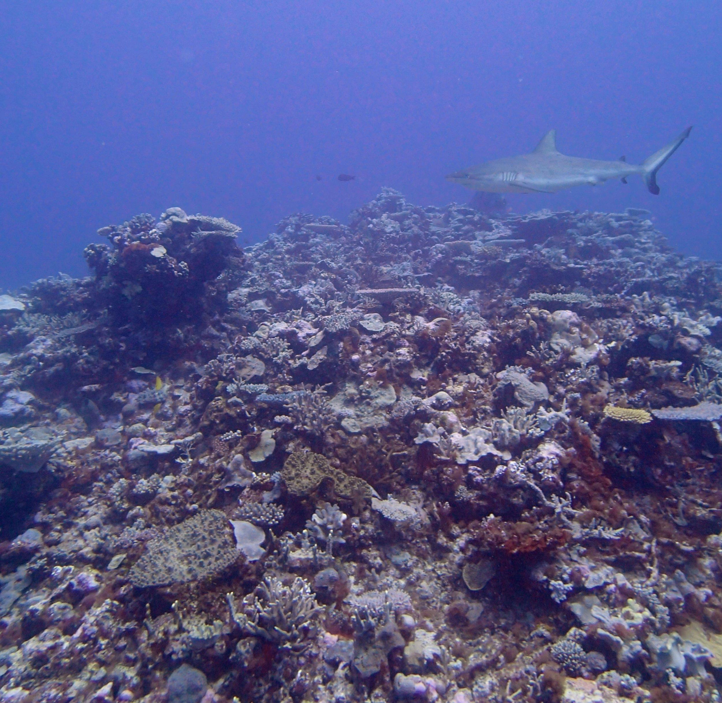 another shark.jpg