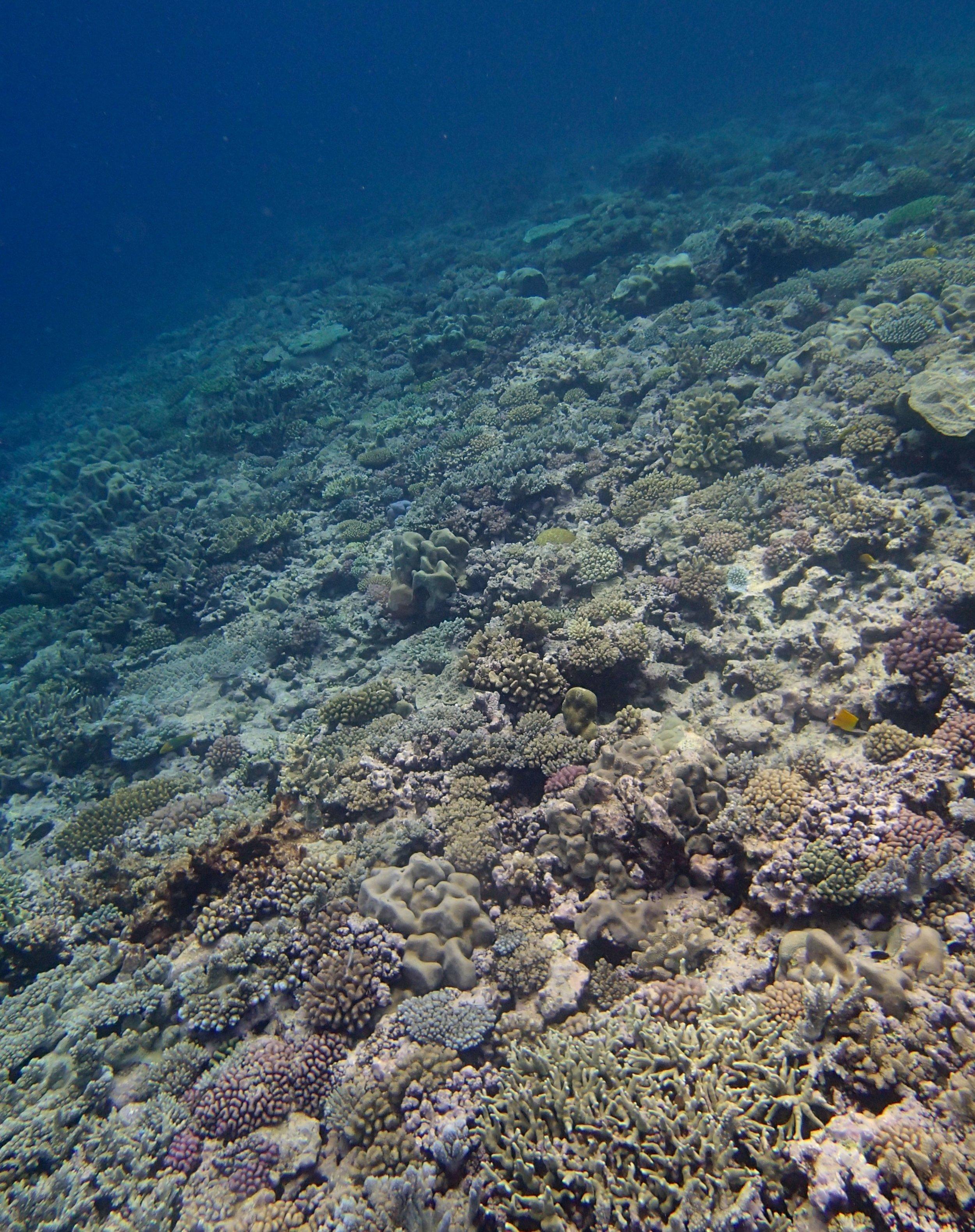 good shot of shallows.jpg