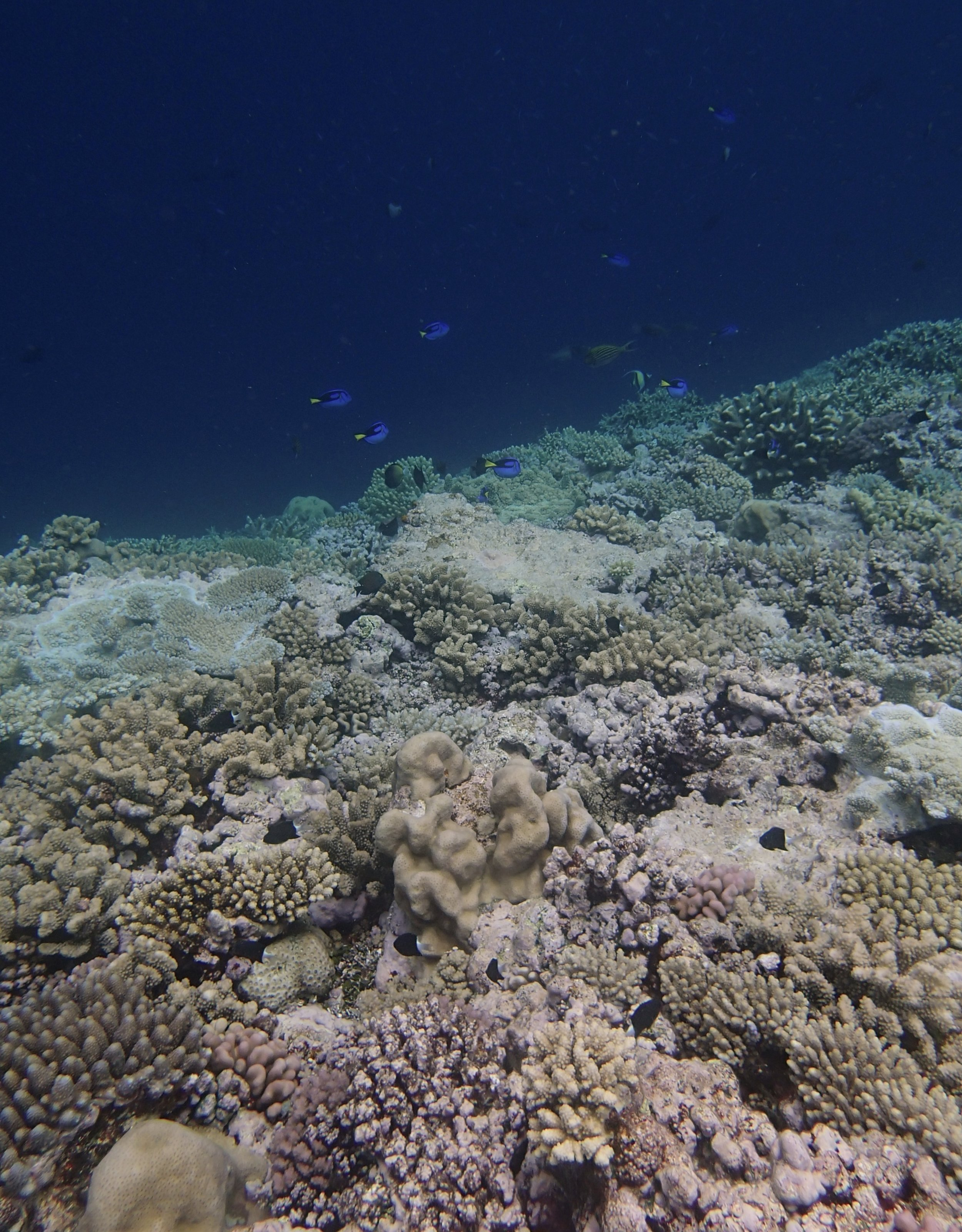 4th dive at Gilbert Atoll.jpg