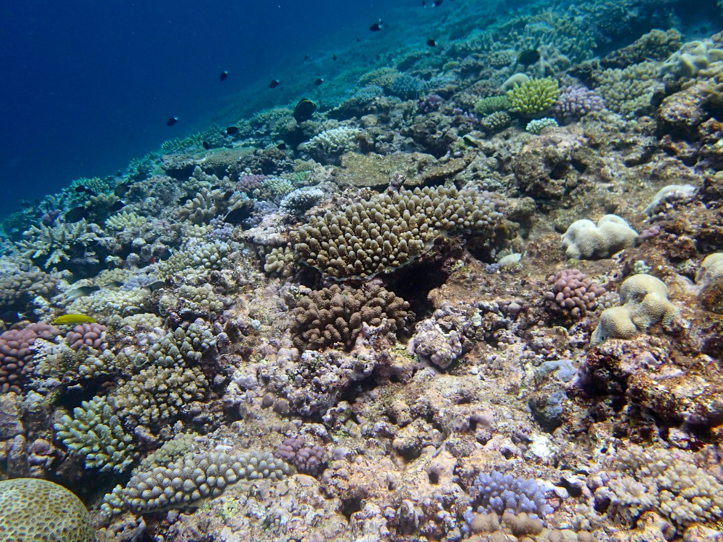 high coral cover at NCGU59.jpg