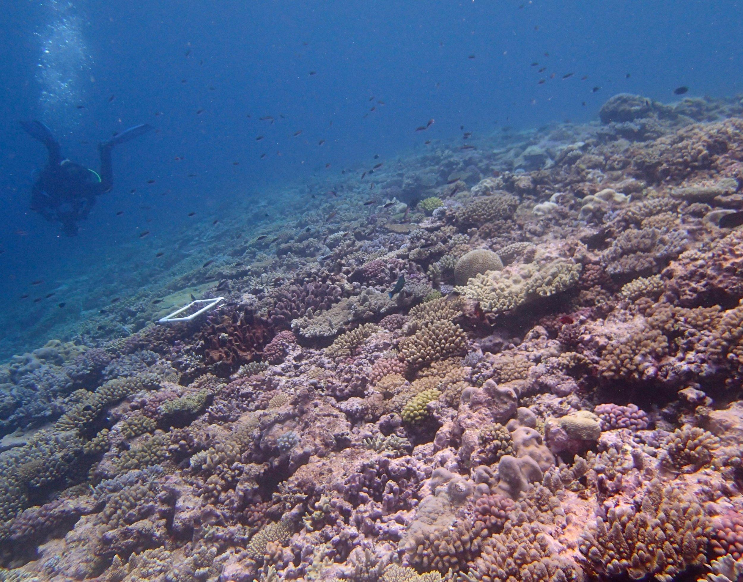 beautiful shot of Gilbert Atoll.jpg