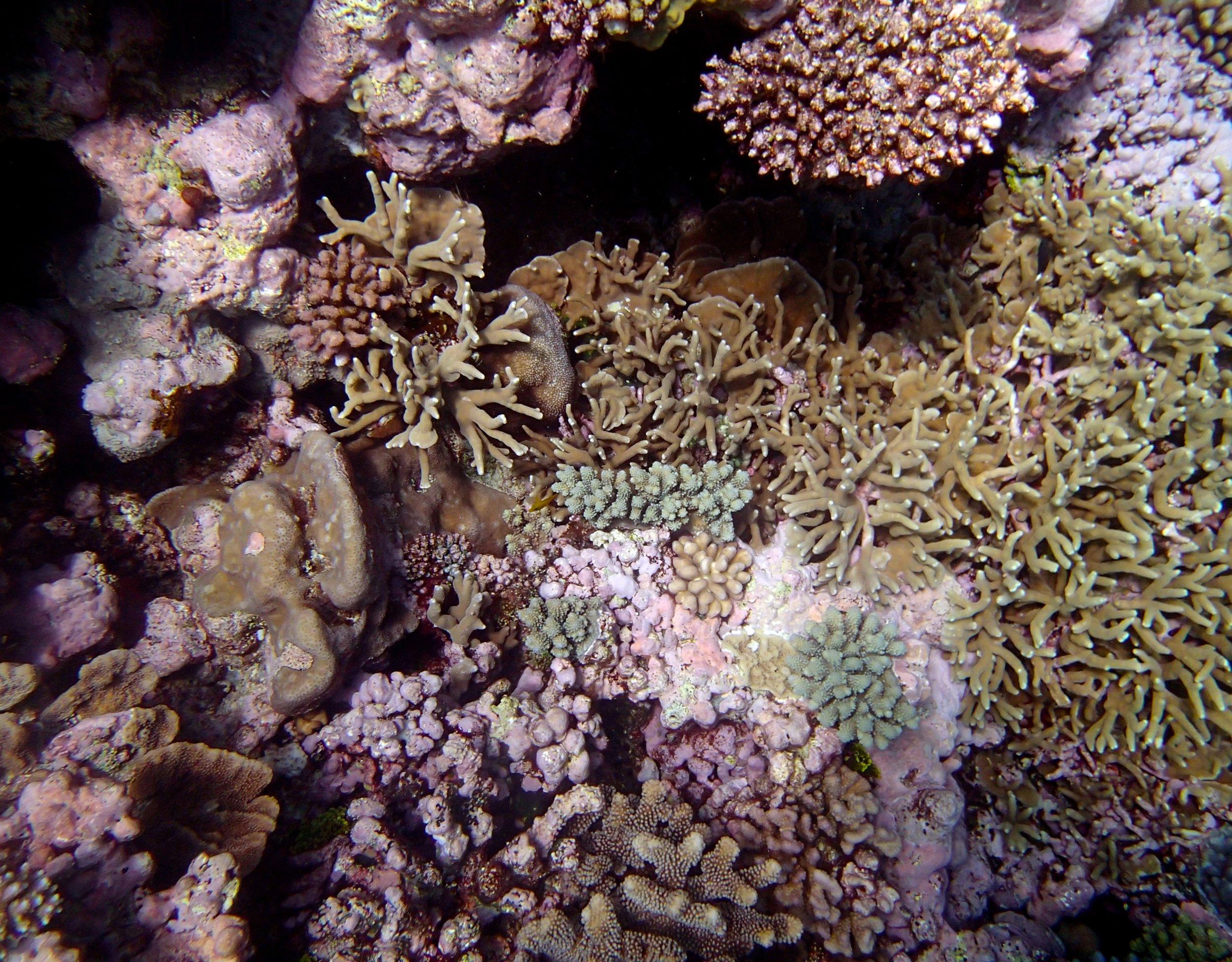 beautiful coral shot.jpg