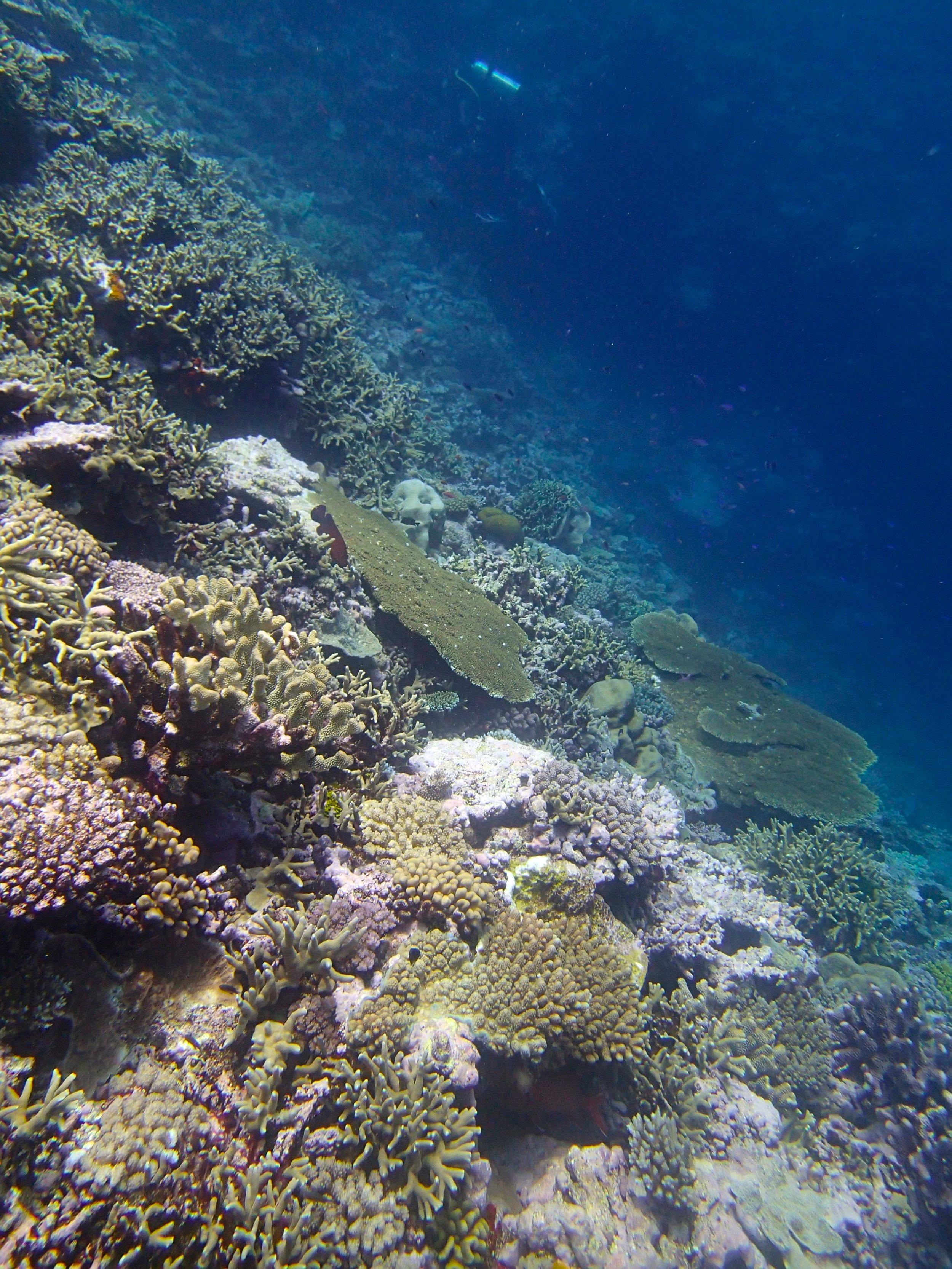 beautiful dive at Gilbert Atoll.jpg