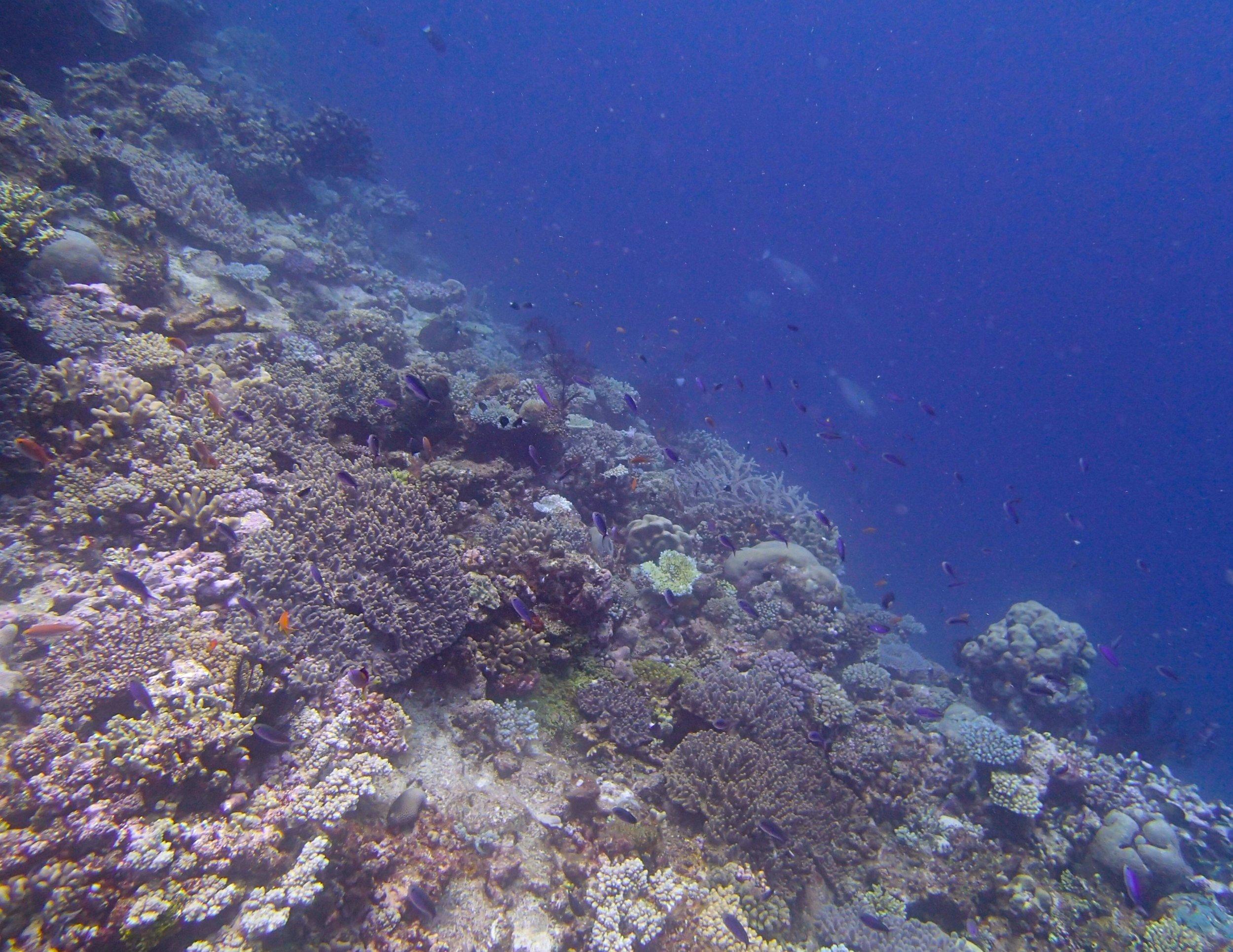 Gilbert Atoll.jpg