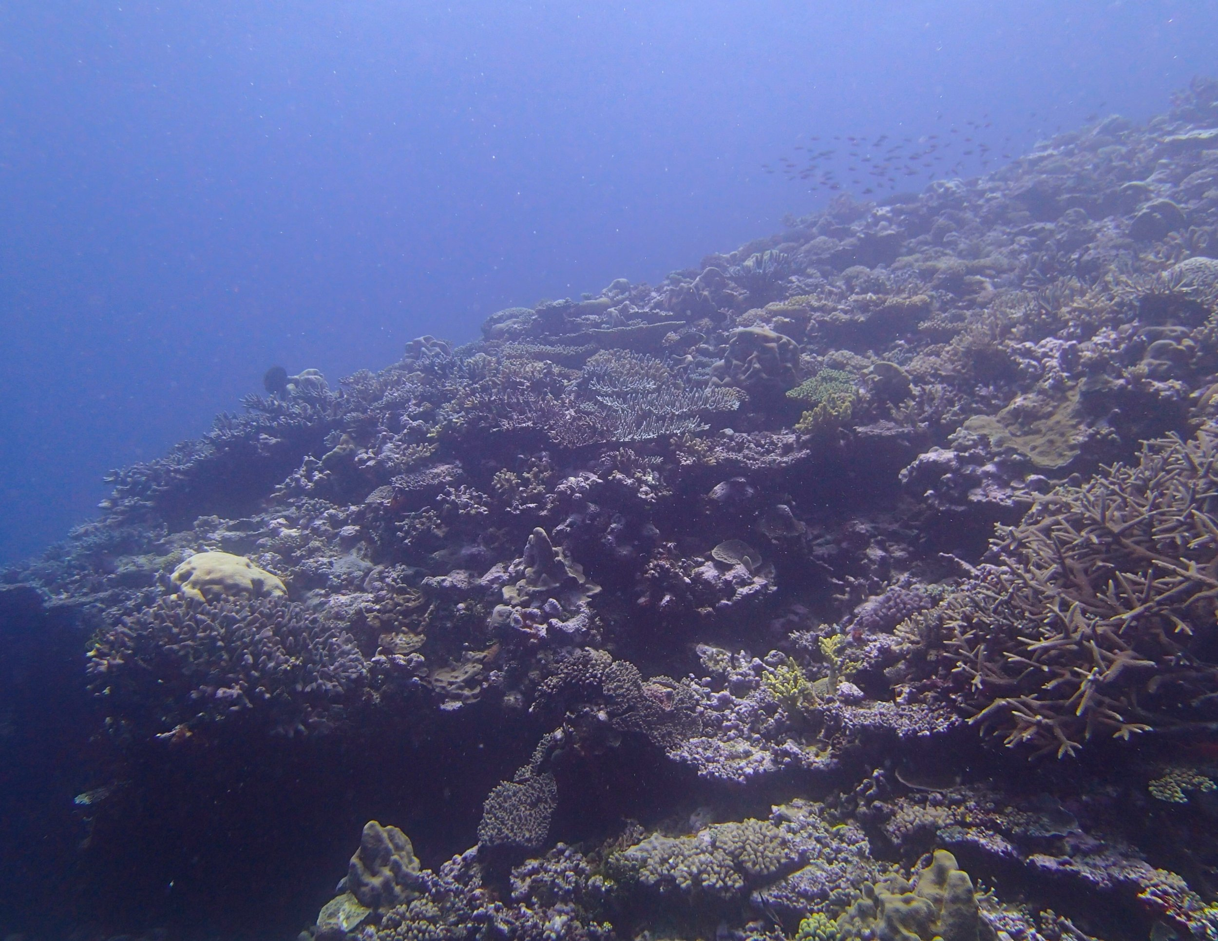 second day at Gilbert Atoll.jpg