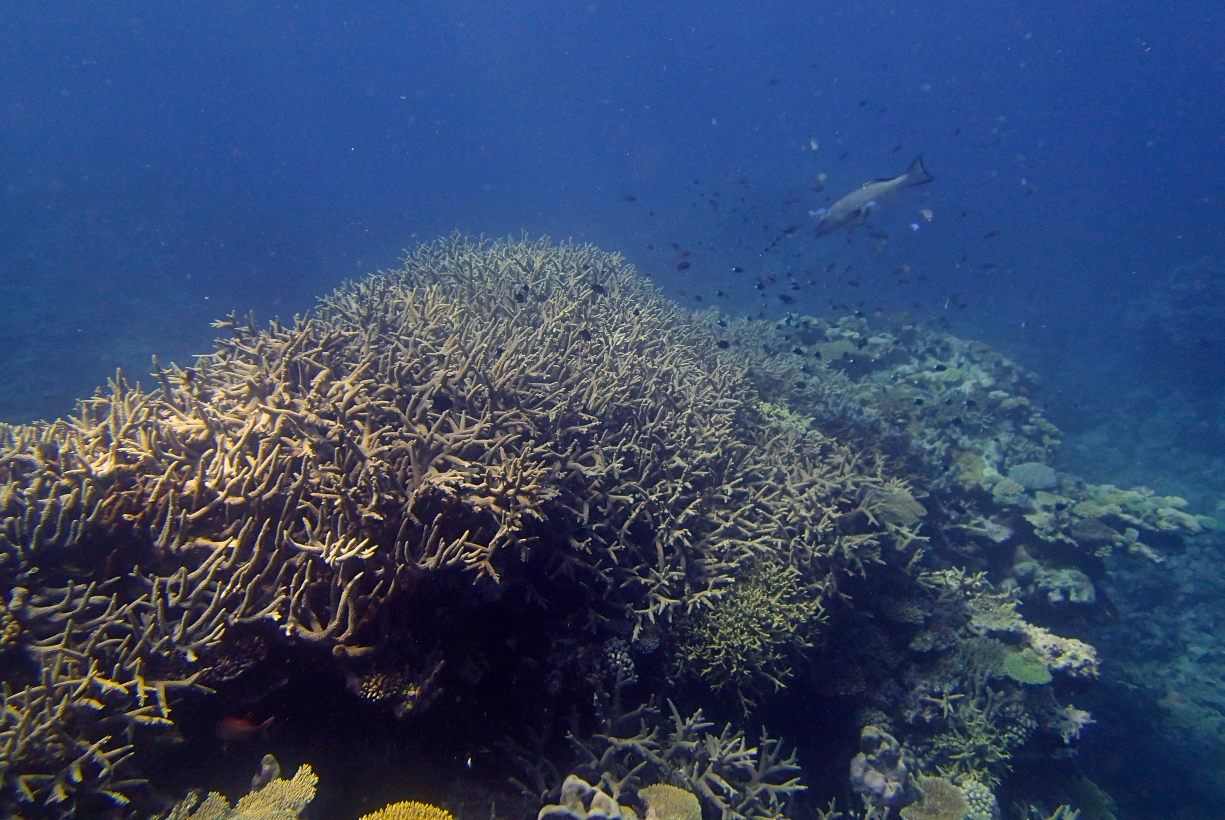 acropora thicket (2).jpg
