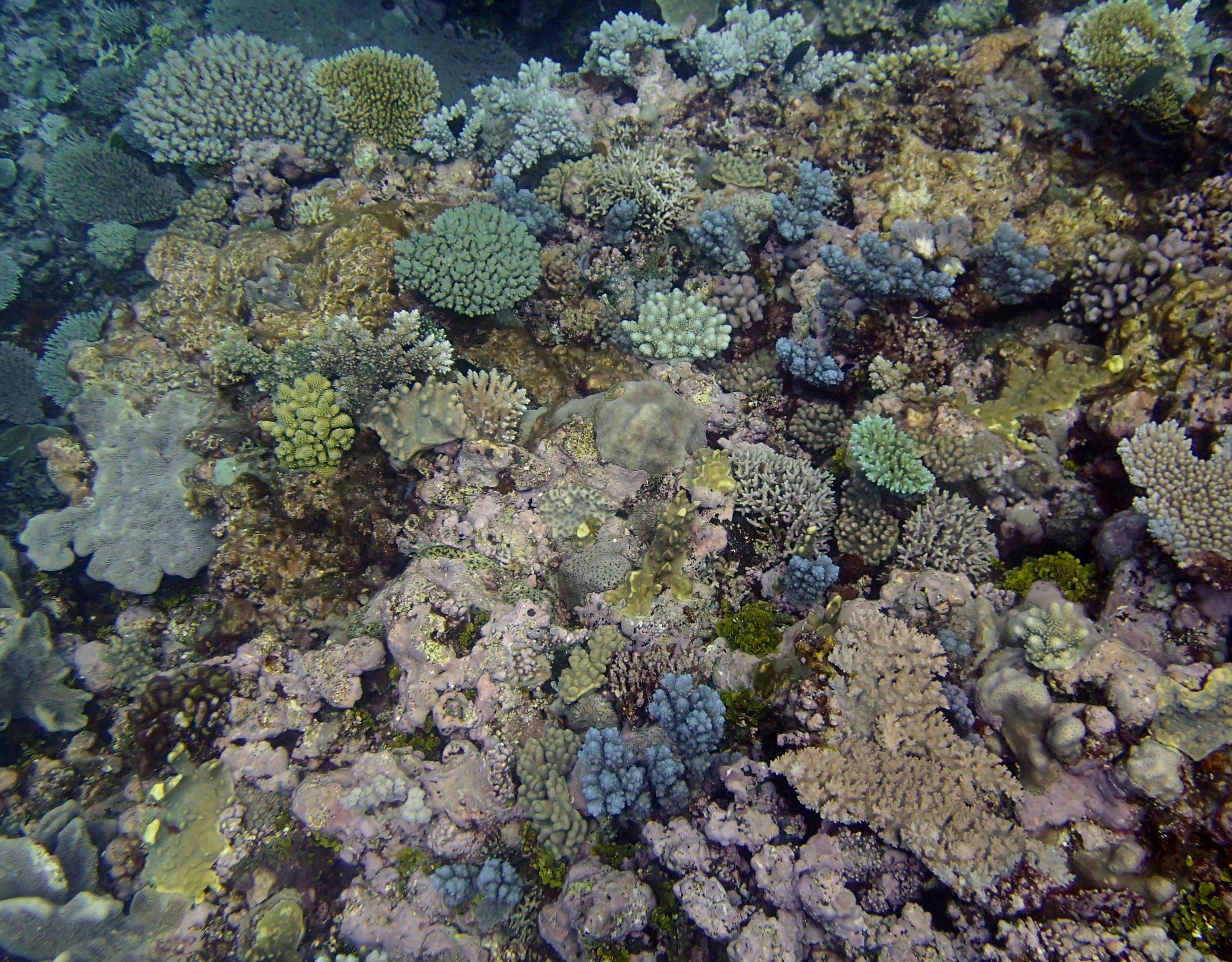 coral and CCA.jpg
