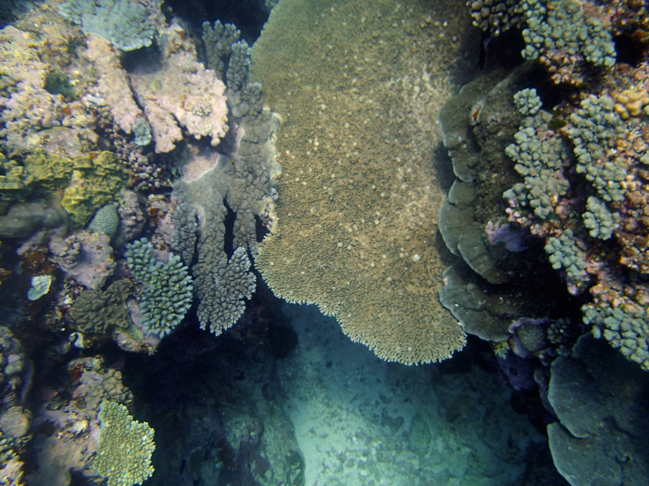 coral bridge (1).jpg