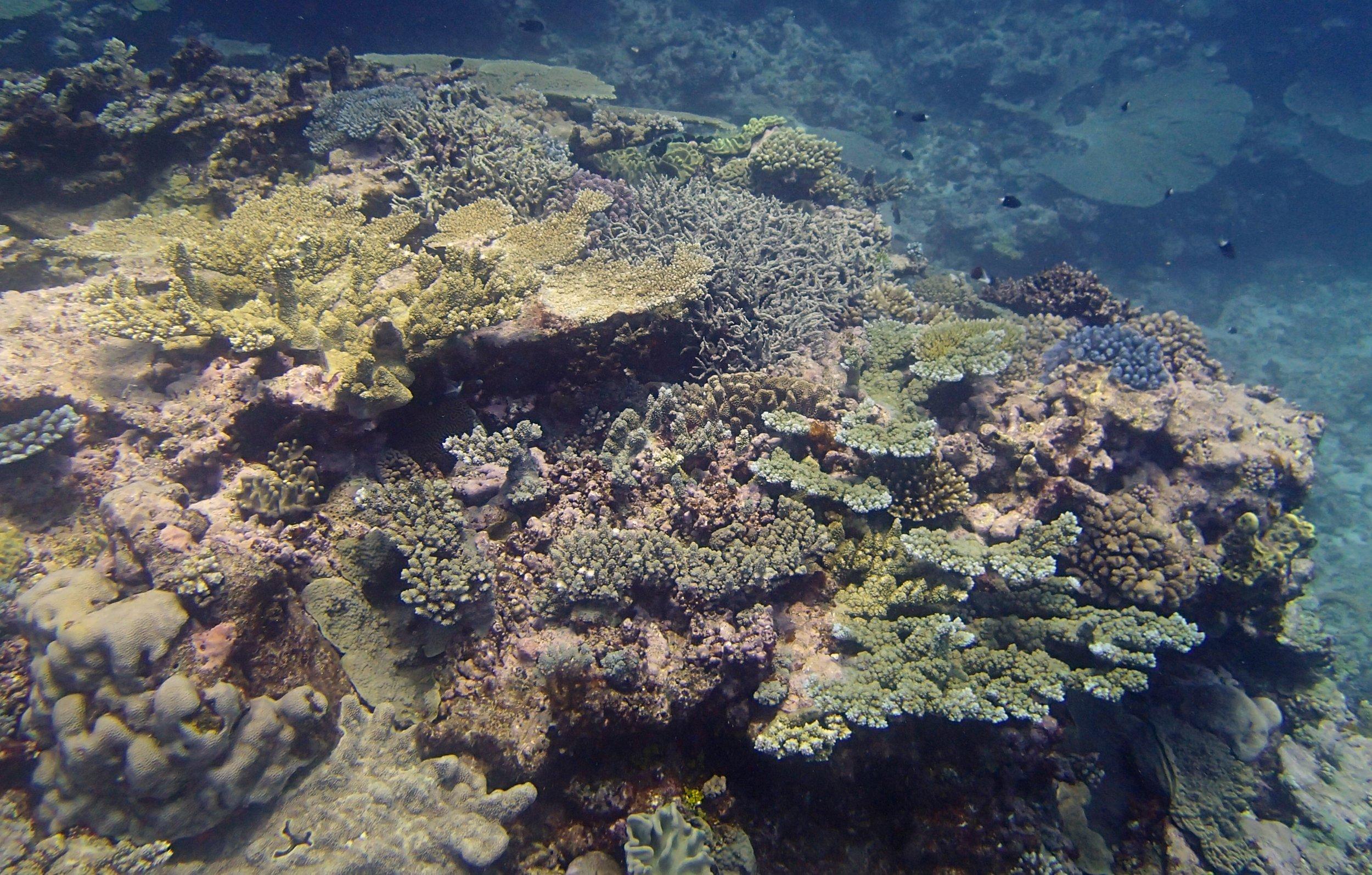 Surprise Atoll dive 2.jpg