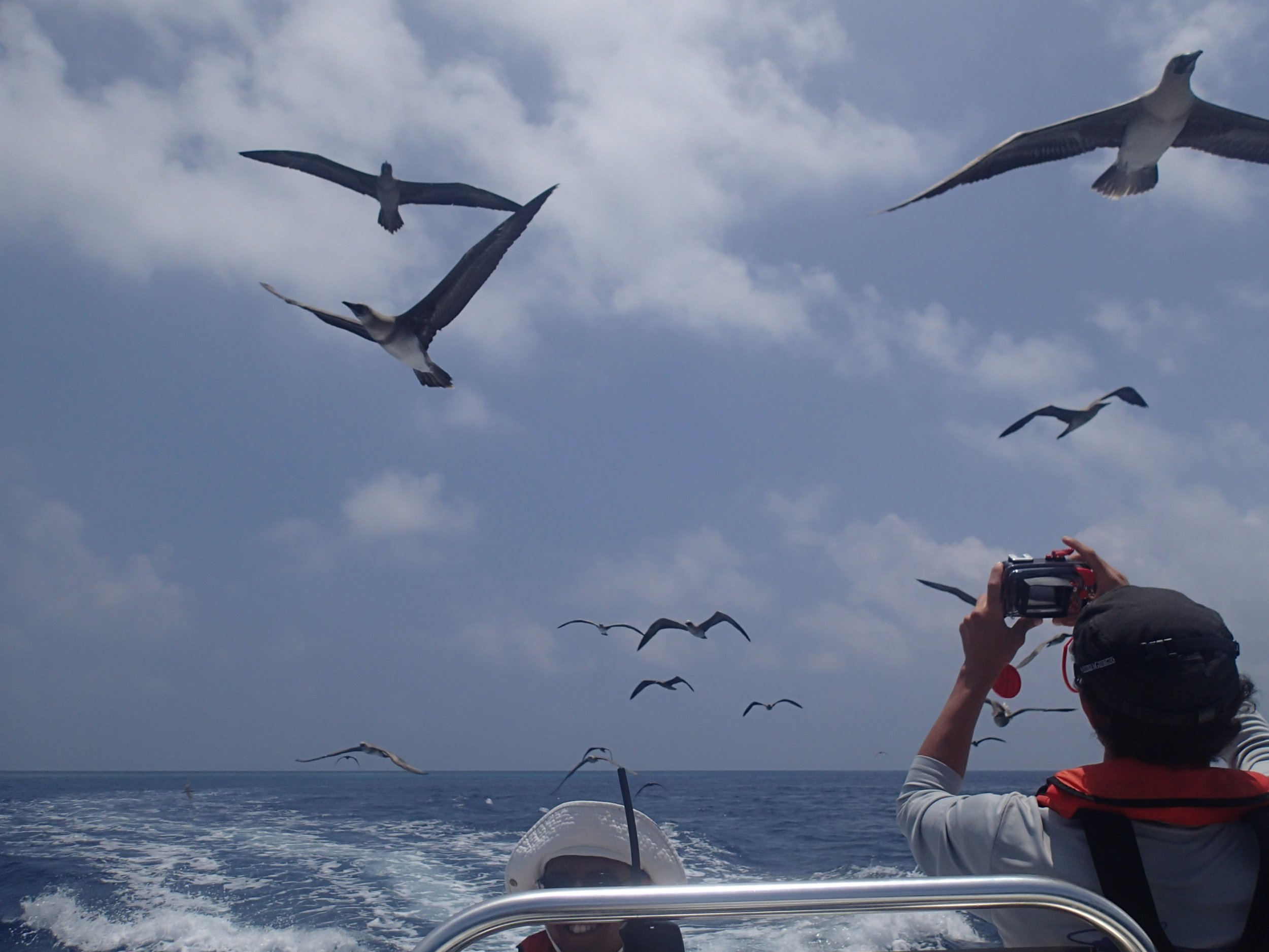 frigate bird attack!.jpg
