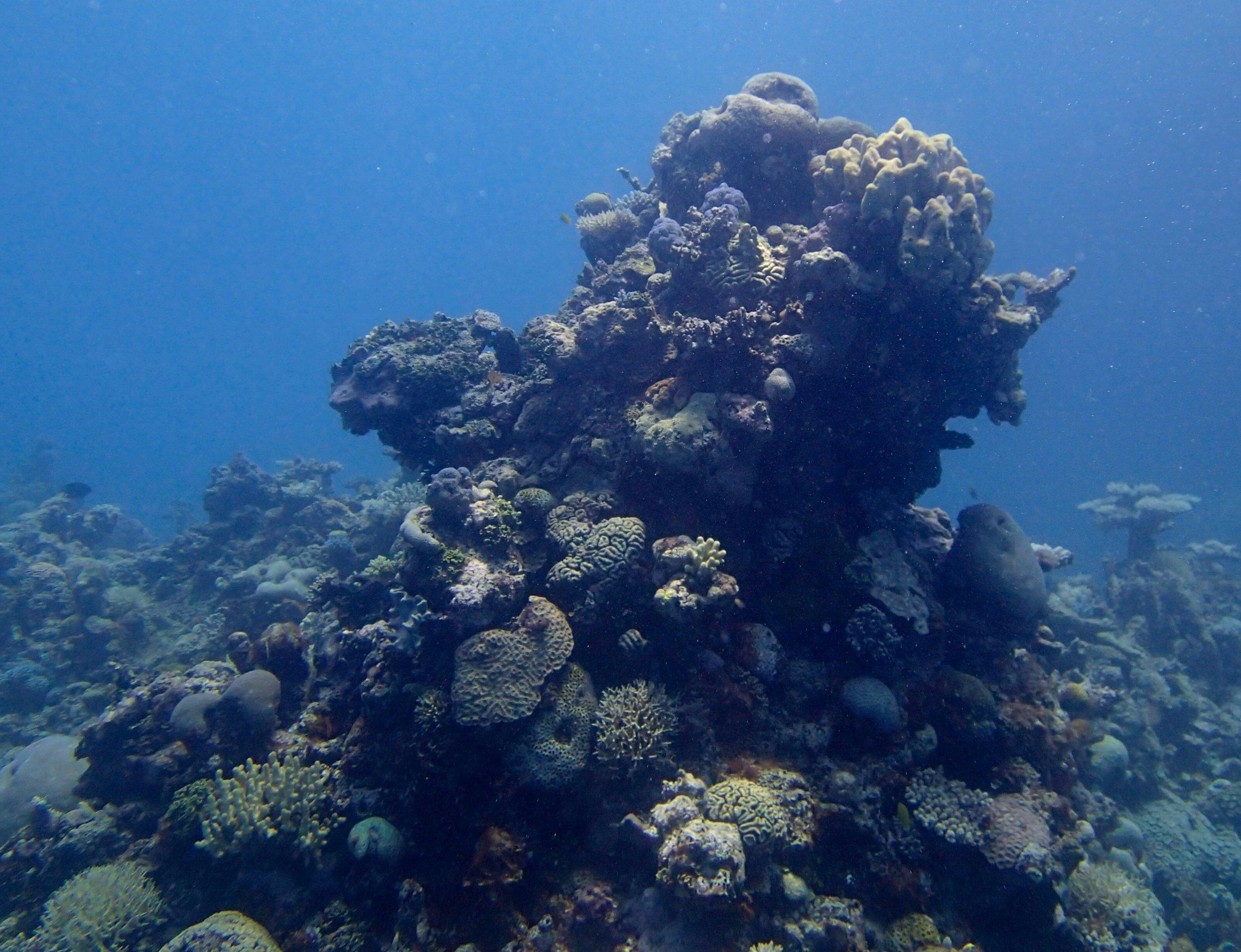 coral pillar.jpg