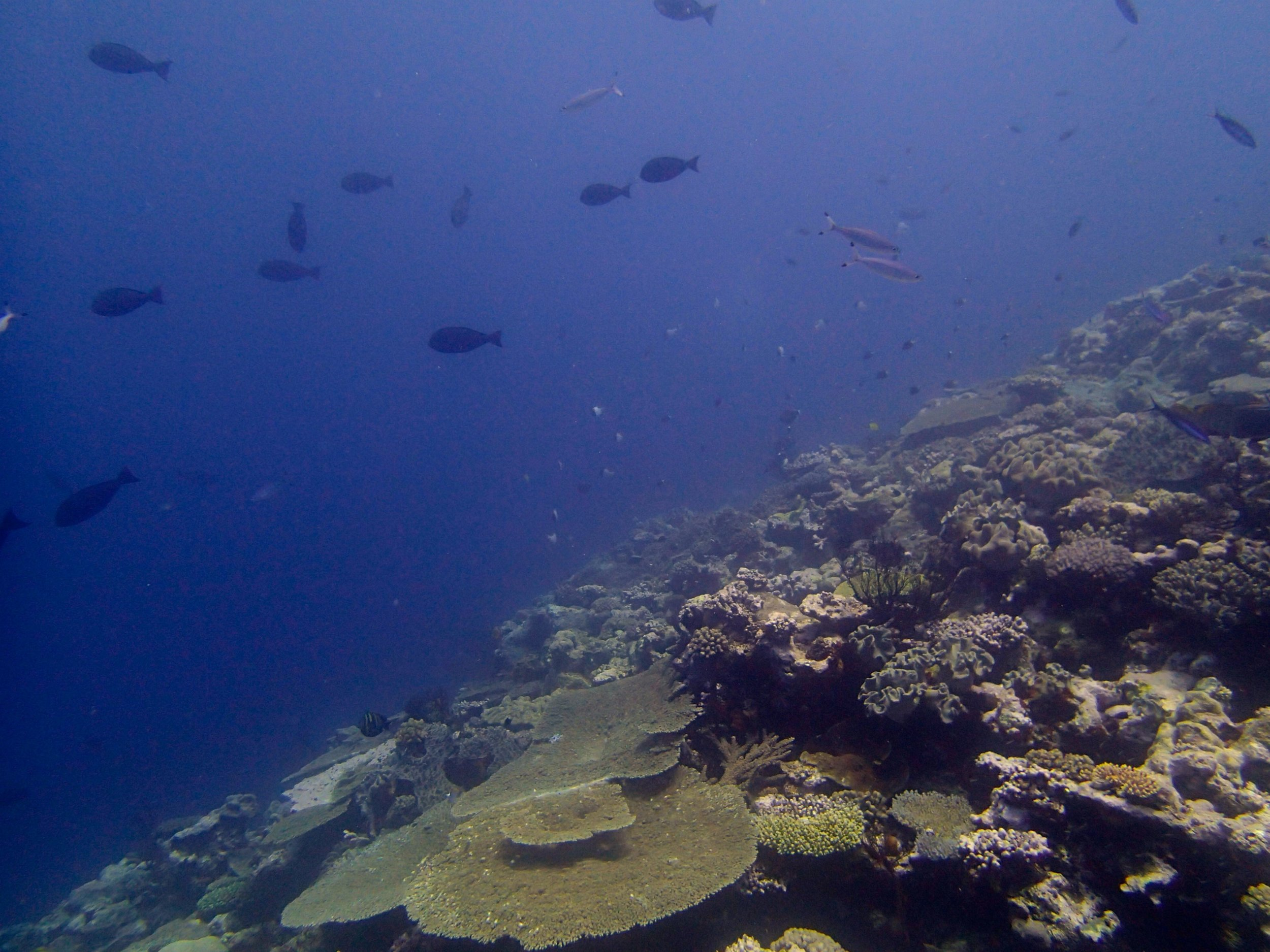 Surprise Atoll.jpg