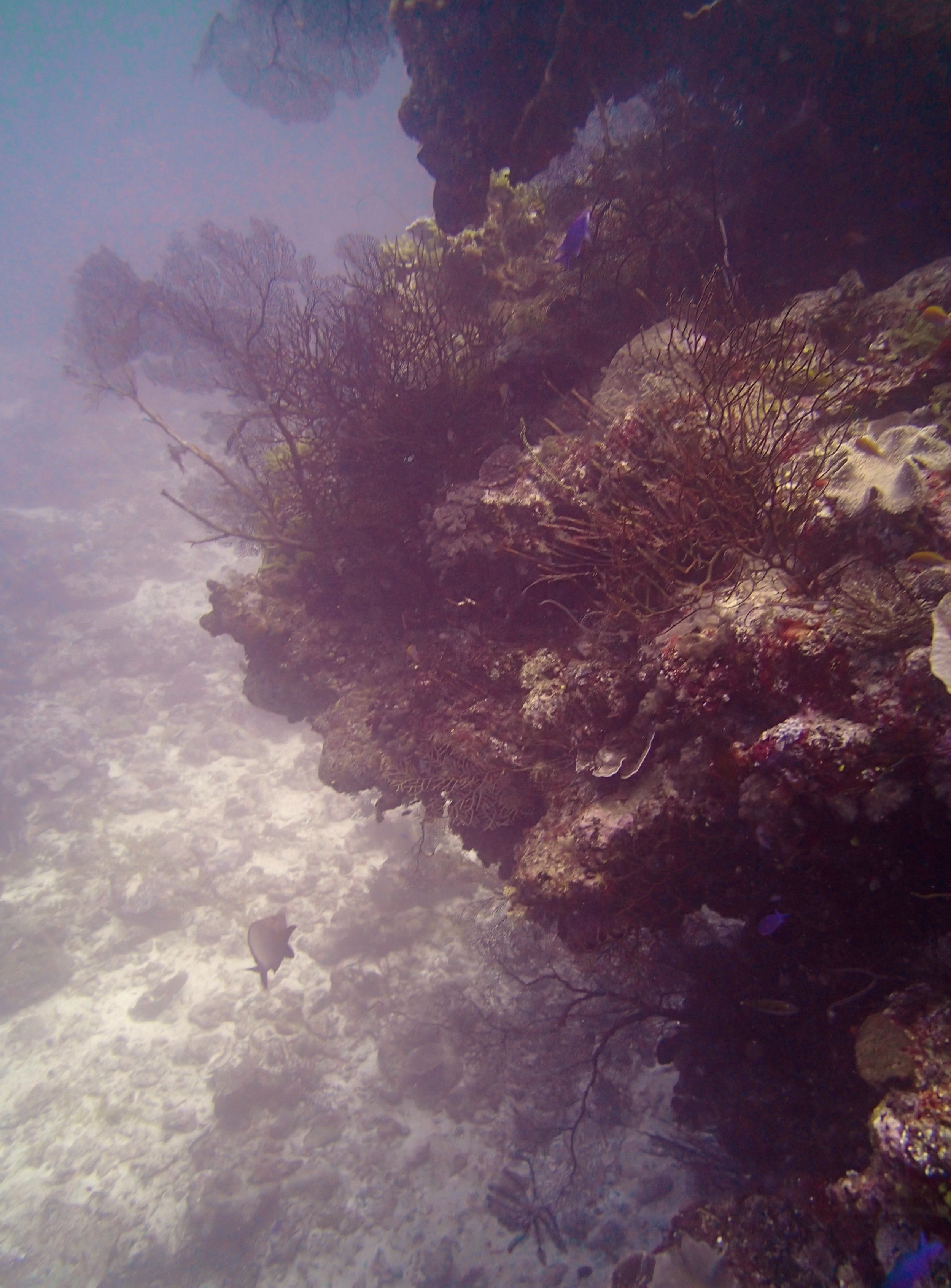 gorgonians.jpg