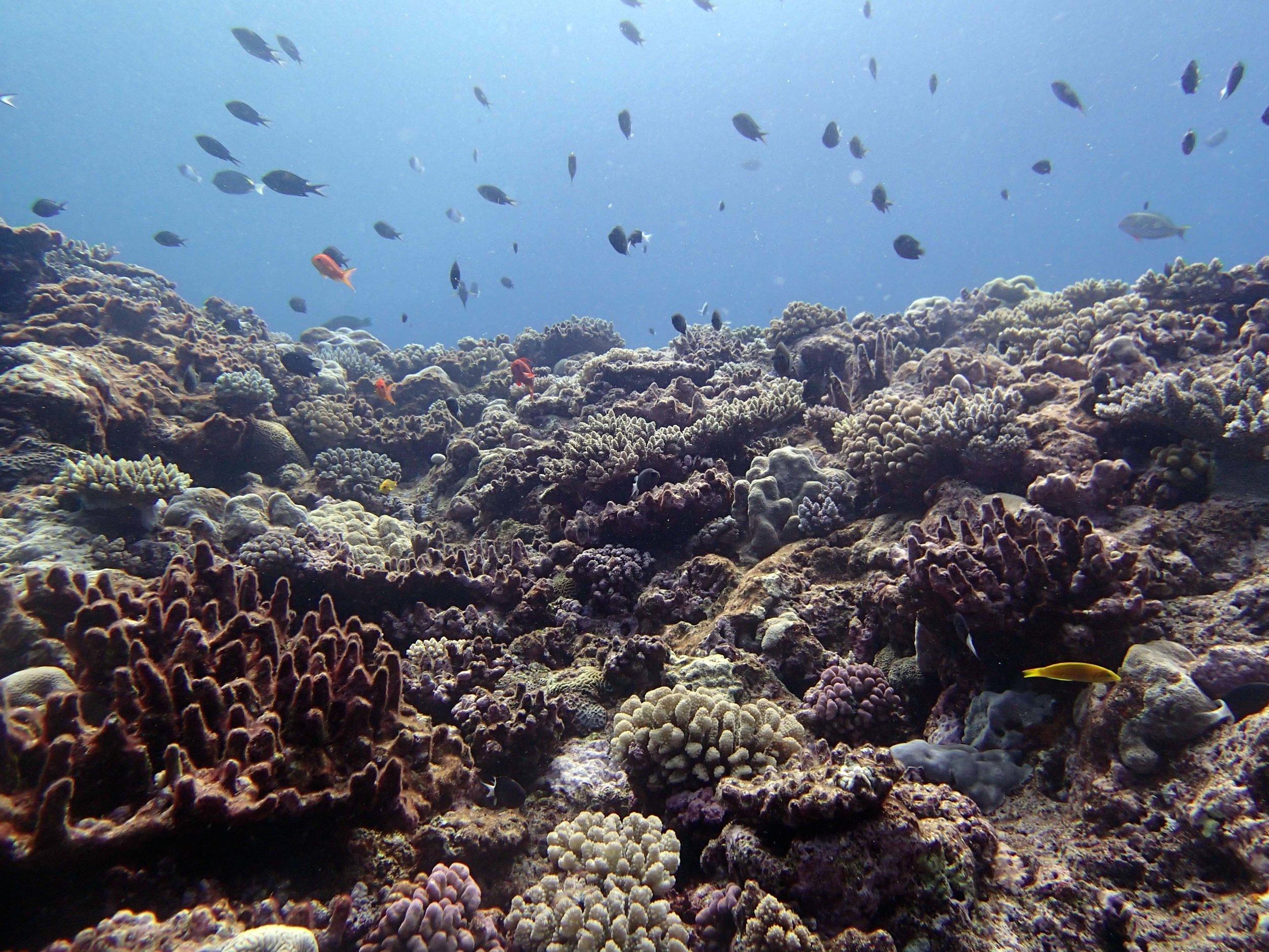shallows of Portail Atoll.jpg