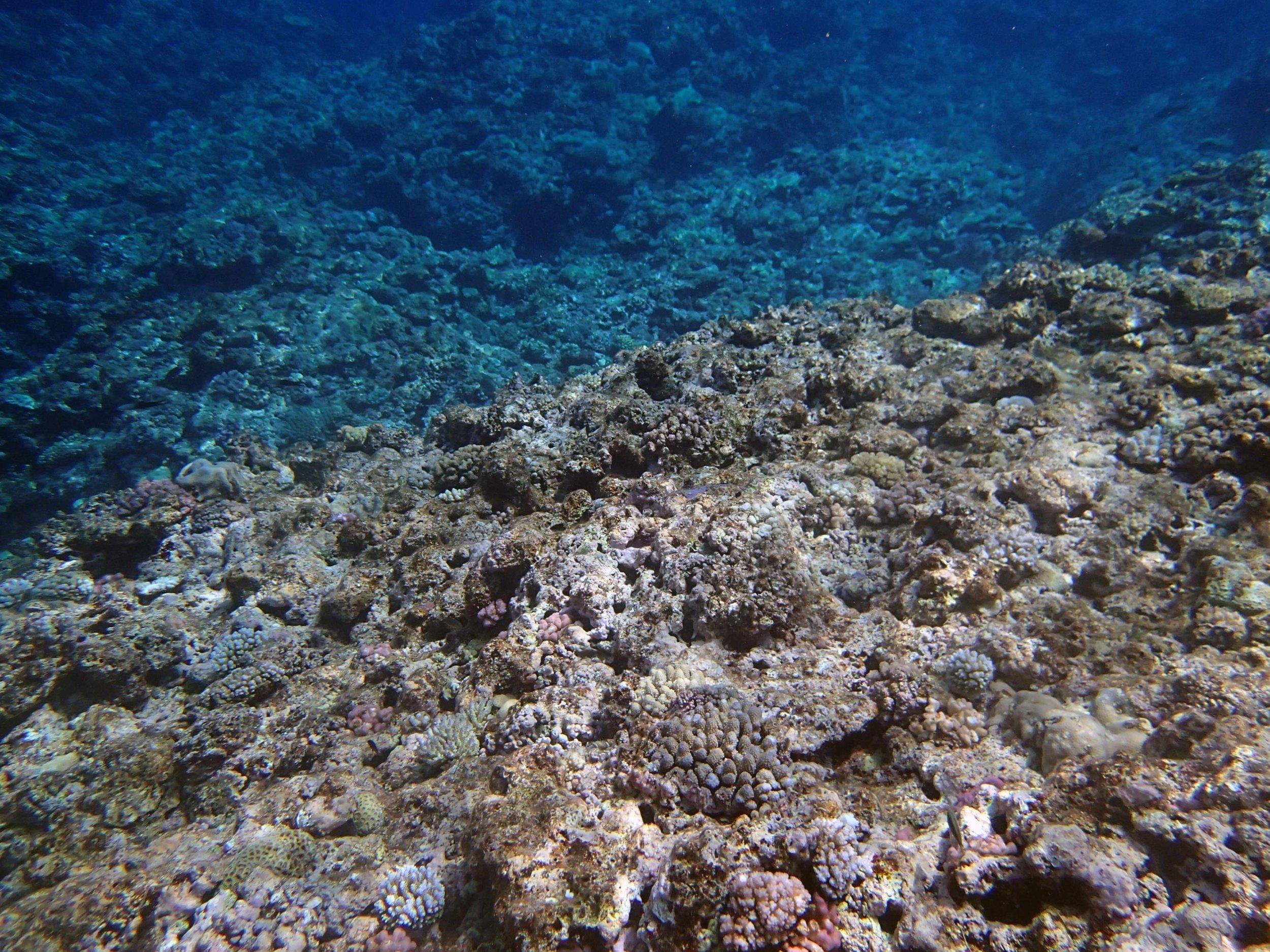 scoured shallows.jpg